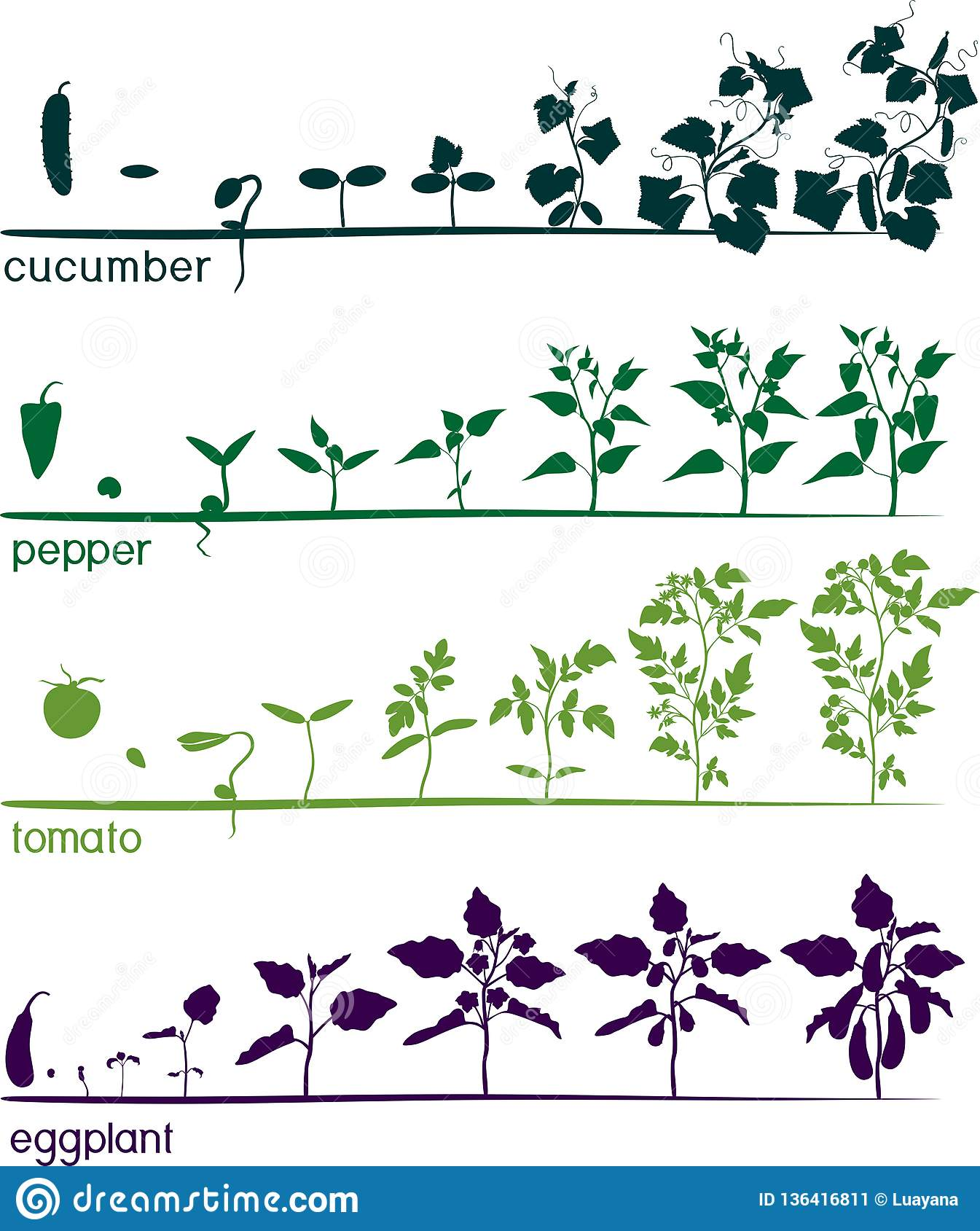 Set Of Life Cycles Of Different Agricultural Plants