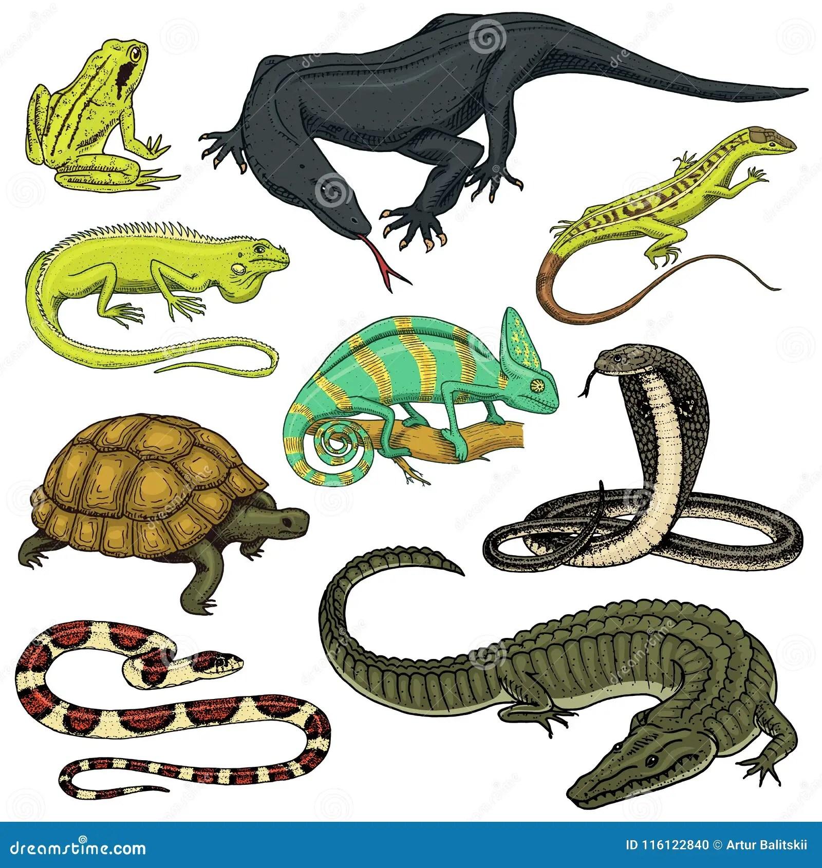Set Of Reptiles And Amphibians Wild Crocodile Alligator