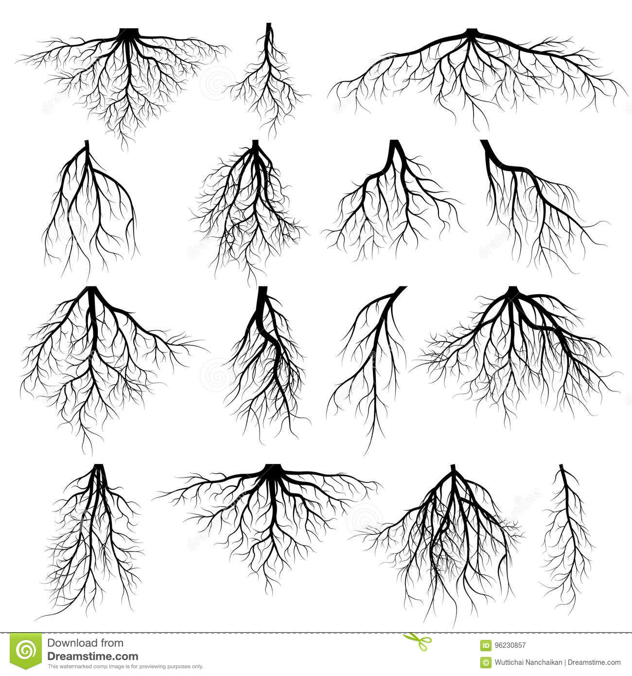 Roots Cartoons Illustrations Amp Vector Stock Images