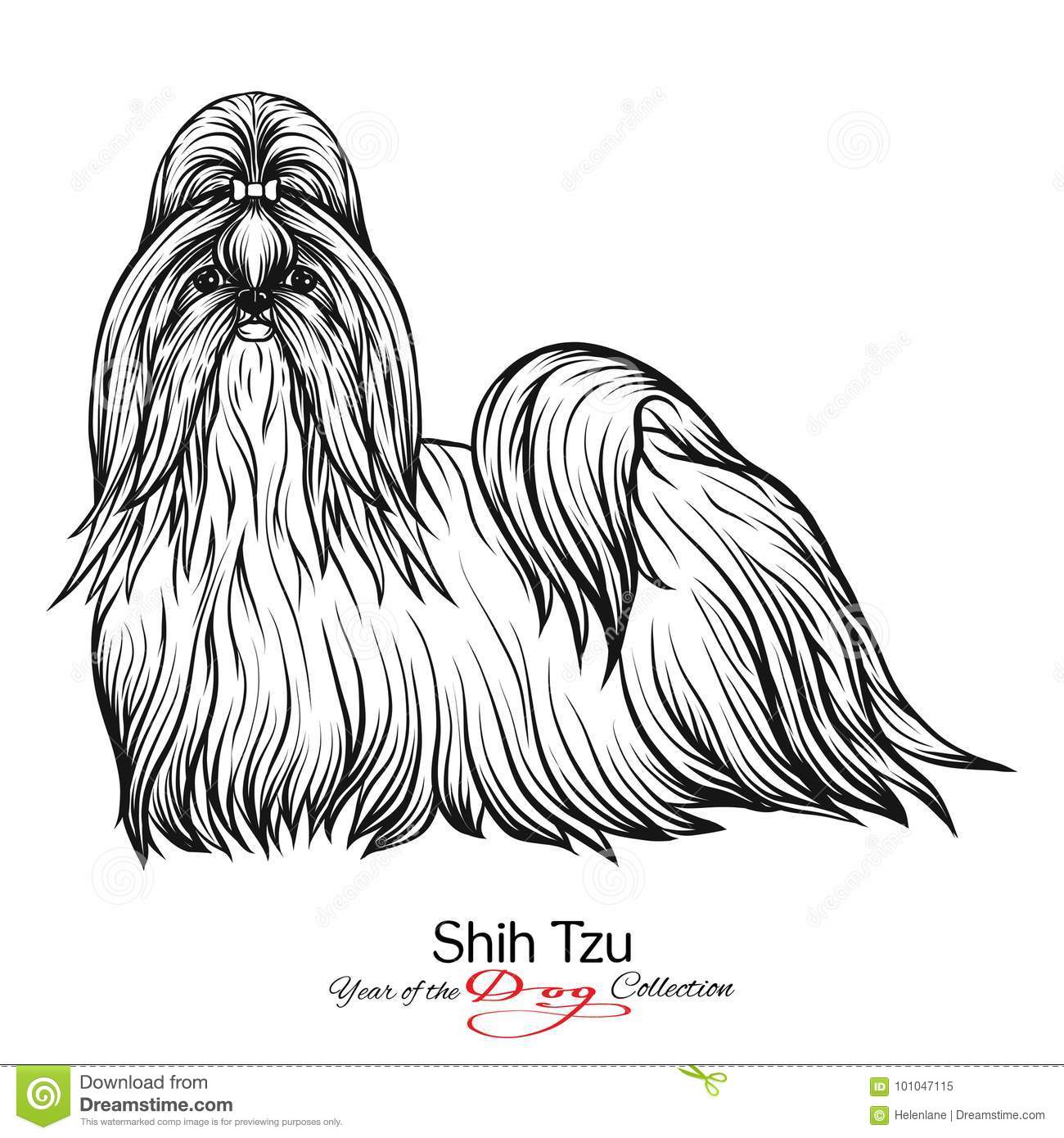 Shih Tzu Black And White Graphic Drawing Of A Dog Stock