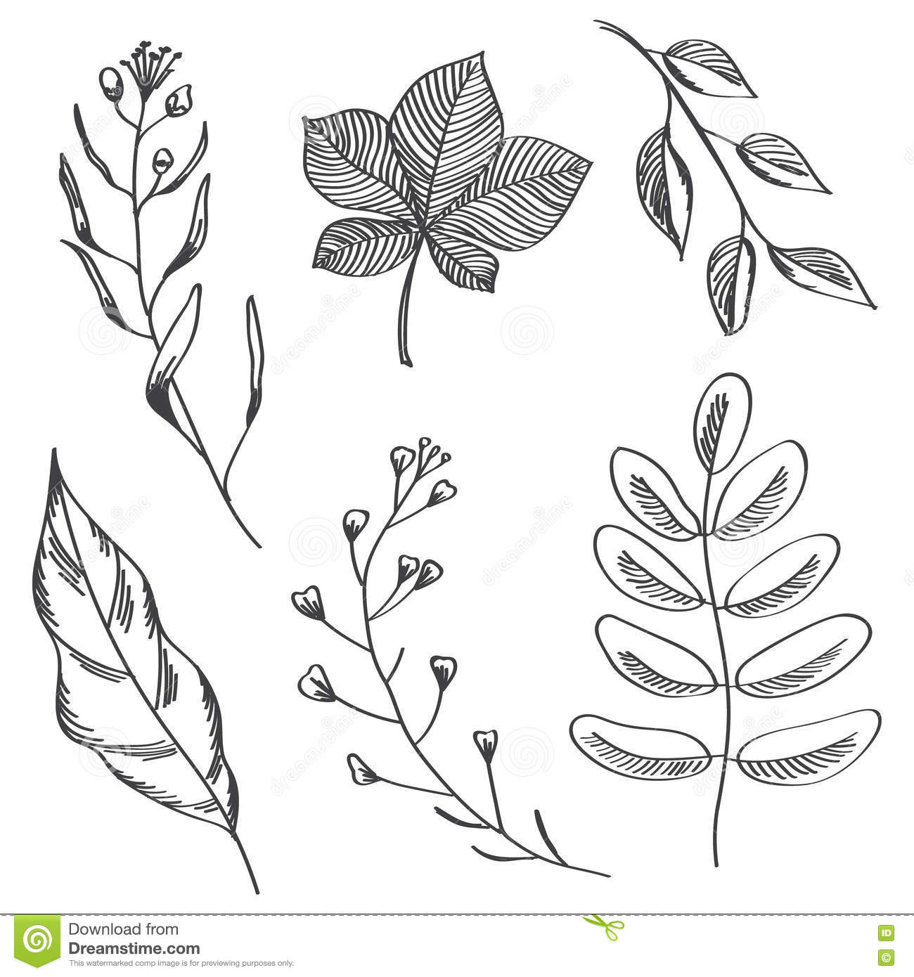 Simple Leaves And Branches Hand Drawn Sketch Stock