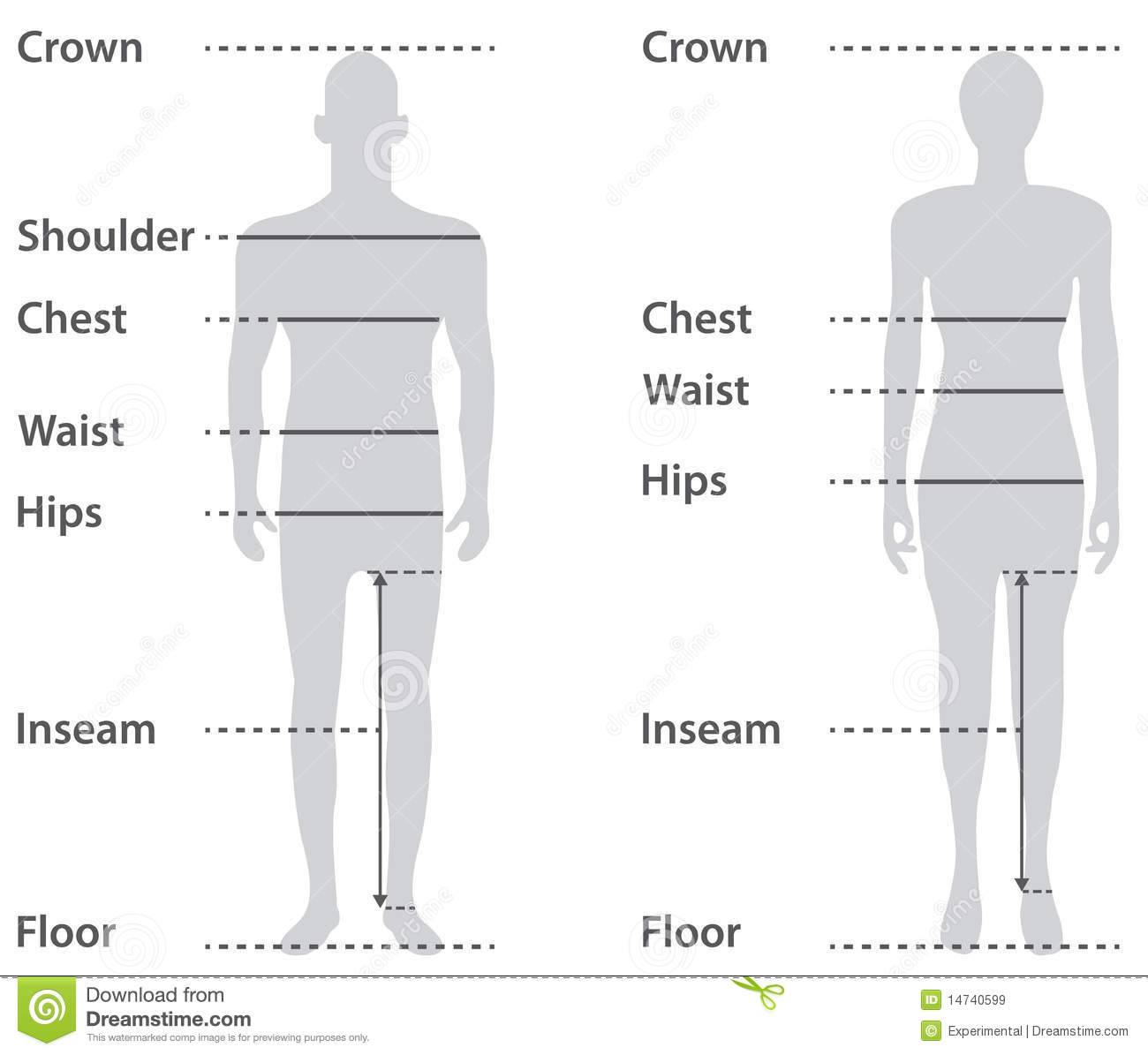Sizing On Male And Female Body Royalty Free Stock Images