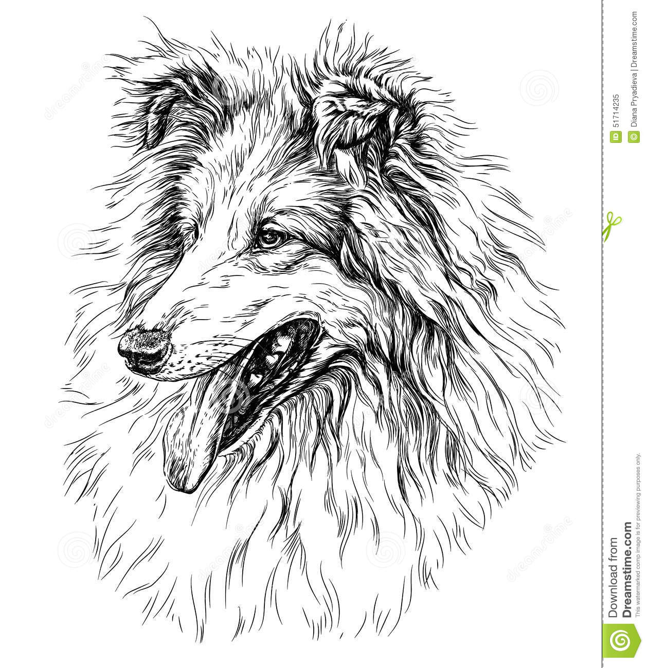 Sketch Of Dog Ollie Stock Vector