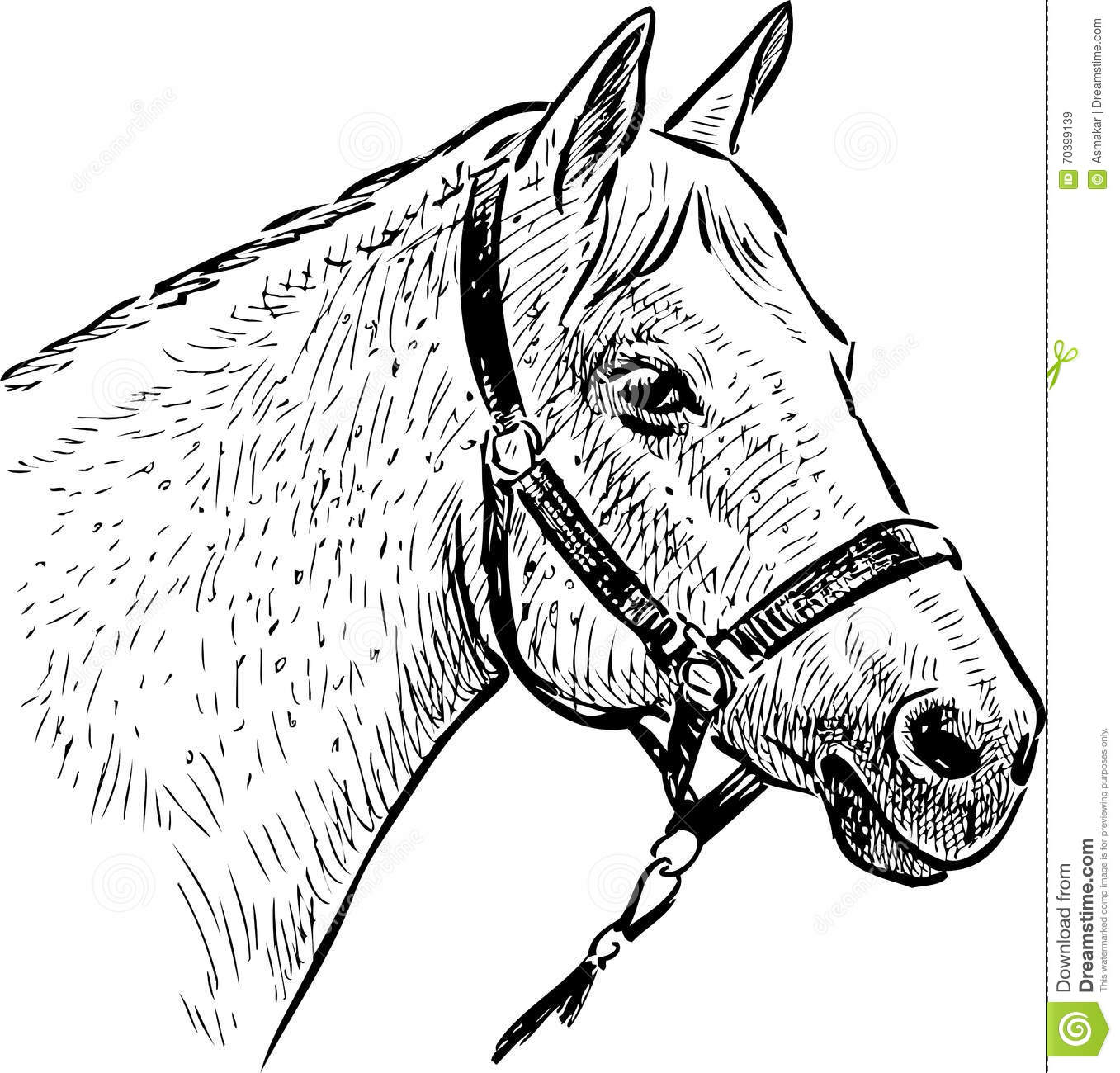 Sketch Of The Horse Head Stock Photo