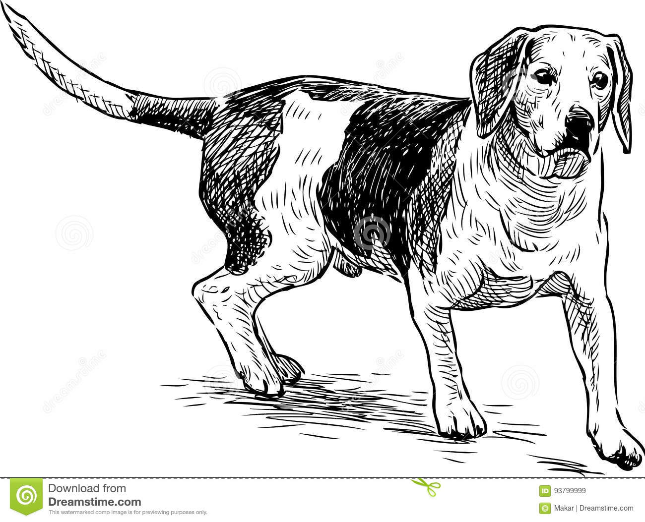 Sketch Of A Hunting Dog Stock Vector Illustration Of