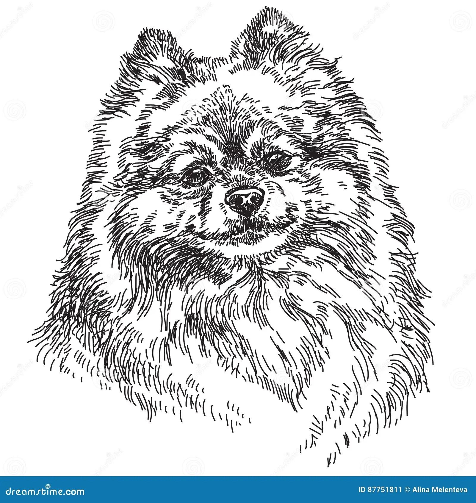 Pomeranian Cartoons Illustrations Amp Vector Stock Images