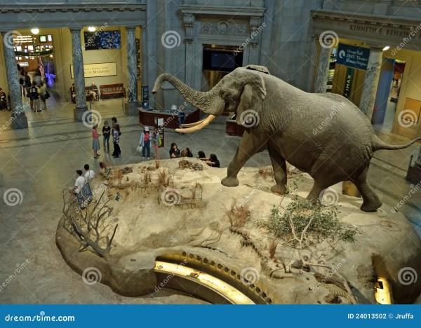 Smithsonian Museum African Elephant Exhibit Editorial ...
