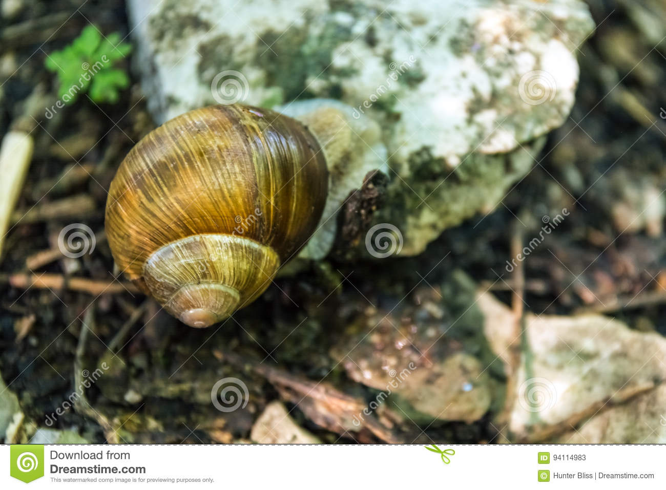 Keep your eyes open and on the right, you will see a smooth white wall maybe a meter and a half high. Snigeln Lilla Shell Forest Floor Nature Creature Animal Vaggar Resti Fotografering For Bildbyraer Bild Av Reflexion Makro 94114983