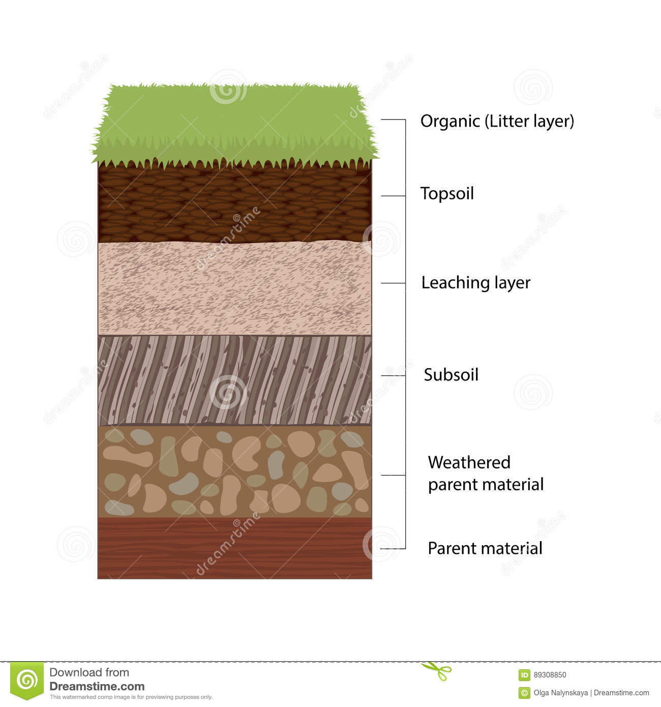 Soil Horizons And Layers Stock Vector Illustration Of