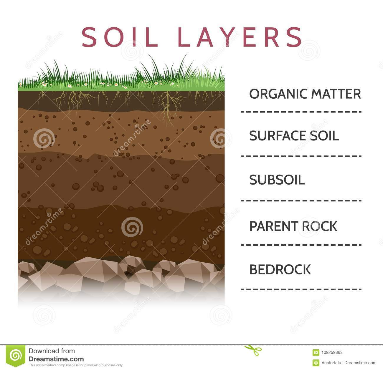 Soil Layer Scheme With Grass Stock Vector