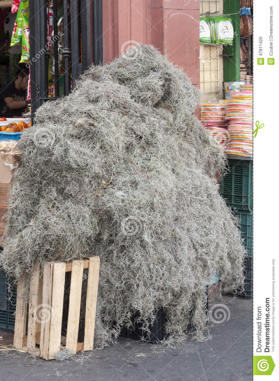 Spanish Moss For Sale Editorial Image Image 47811420