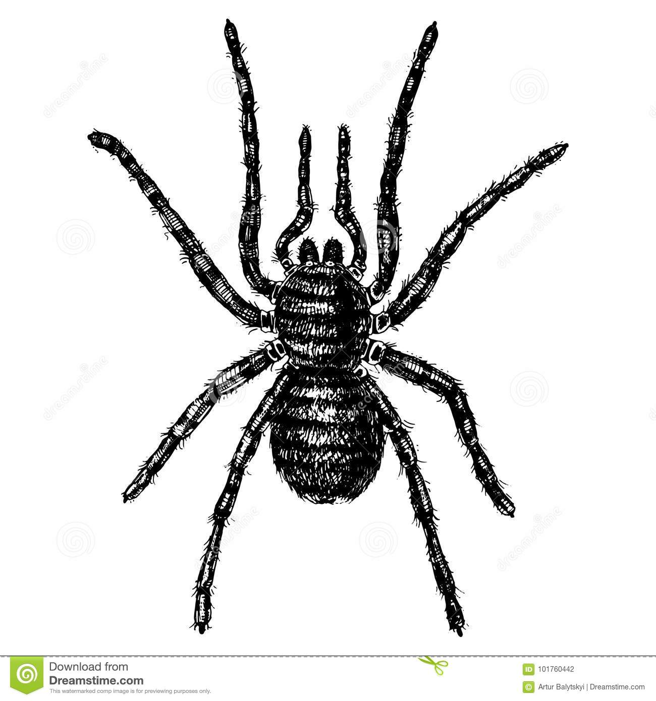 Spider Or Arachnid Species Most Dangerous Insects In The