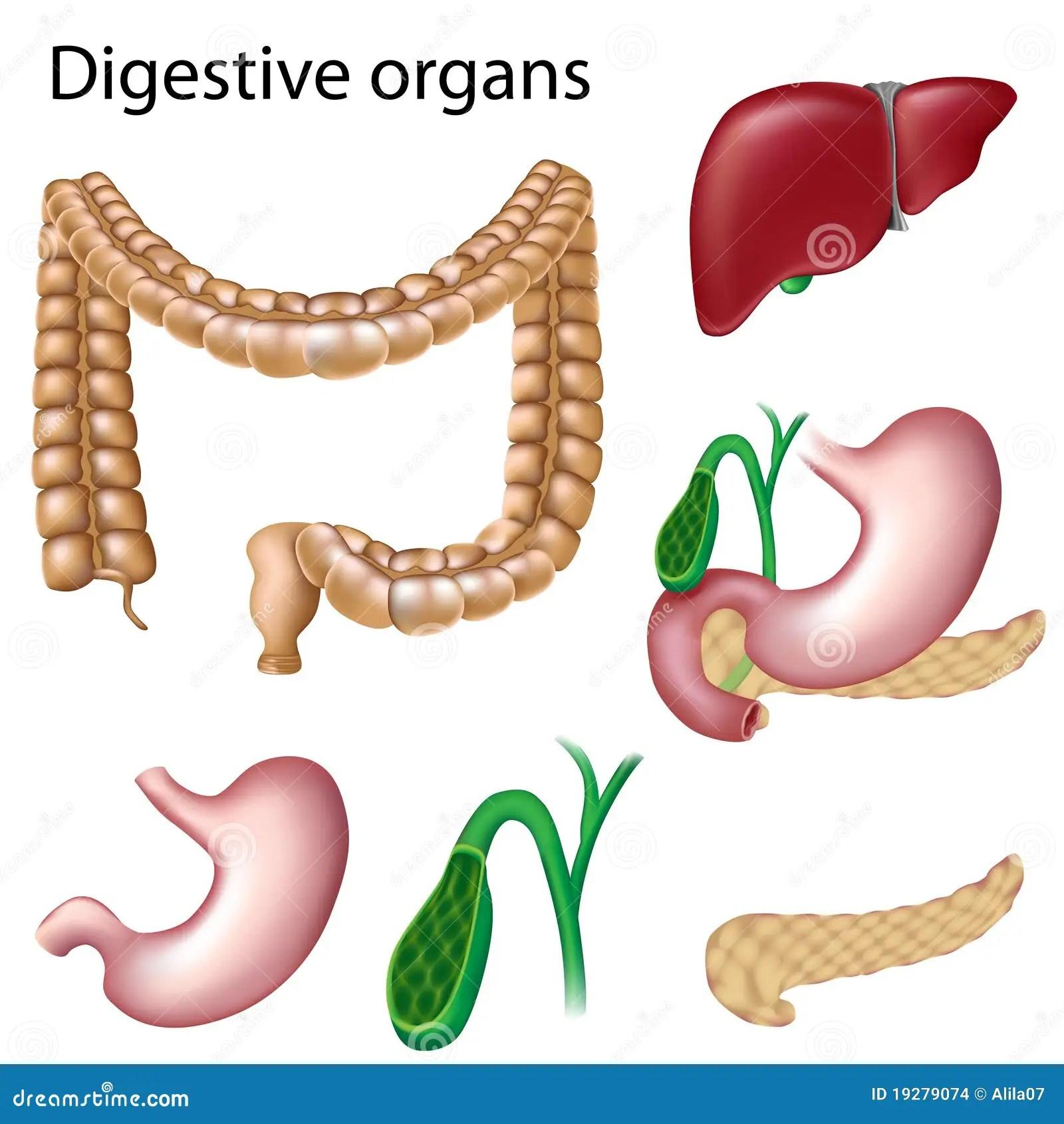 Spijsverterings Geisoleerdem Organen