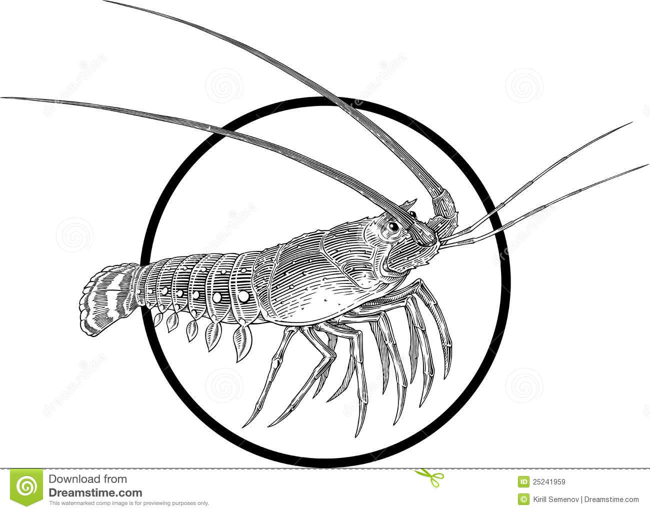 Spiny Lobster Stock Vector Illustration Of Food
