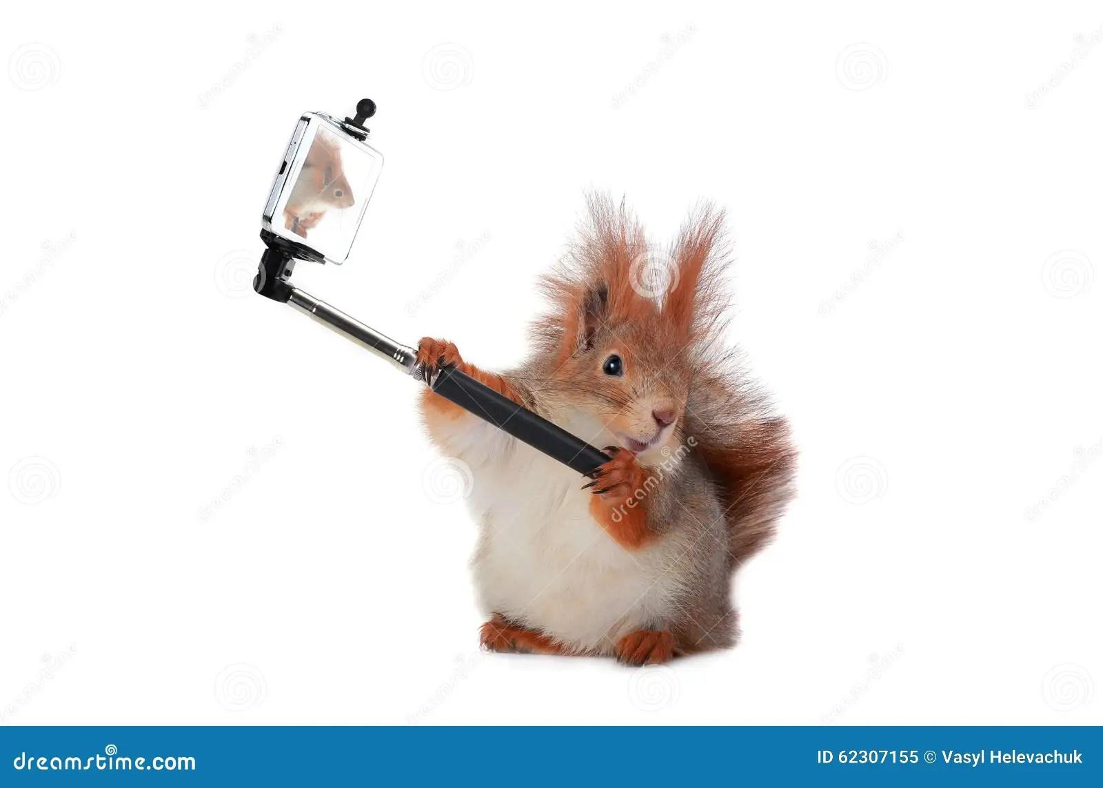 Squirrel Stock Photo Image 62307155