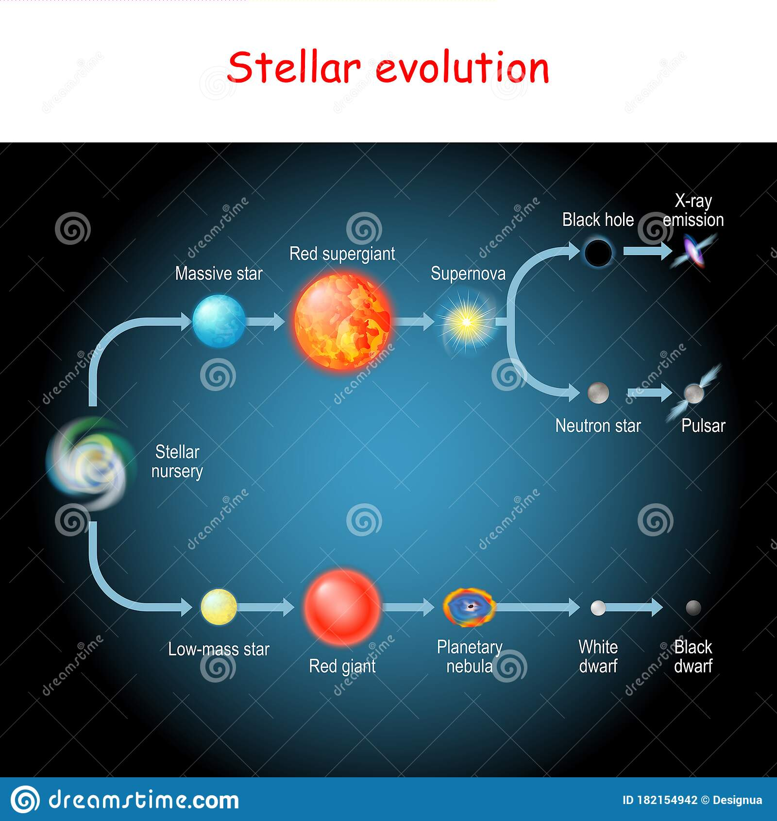 Stellar Evolution Life Cycle Of A Star Stock Vector