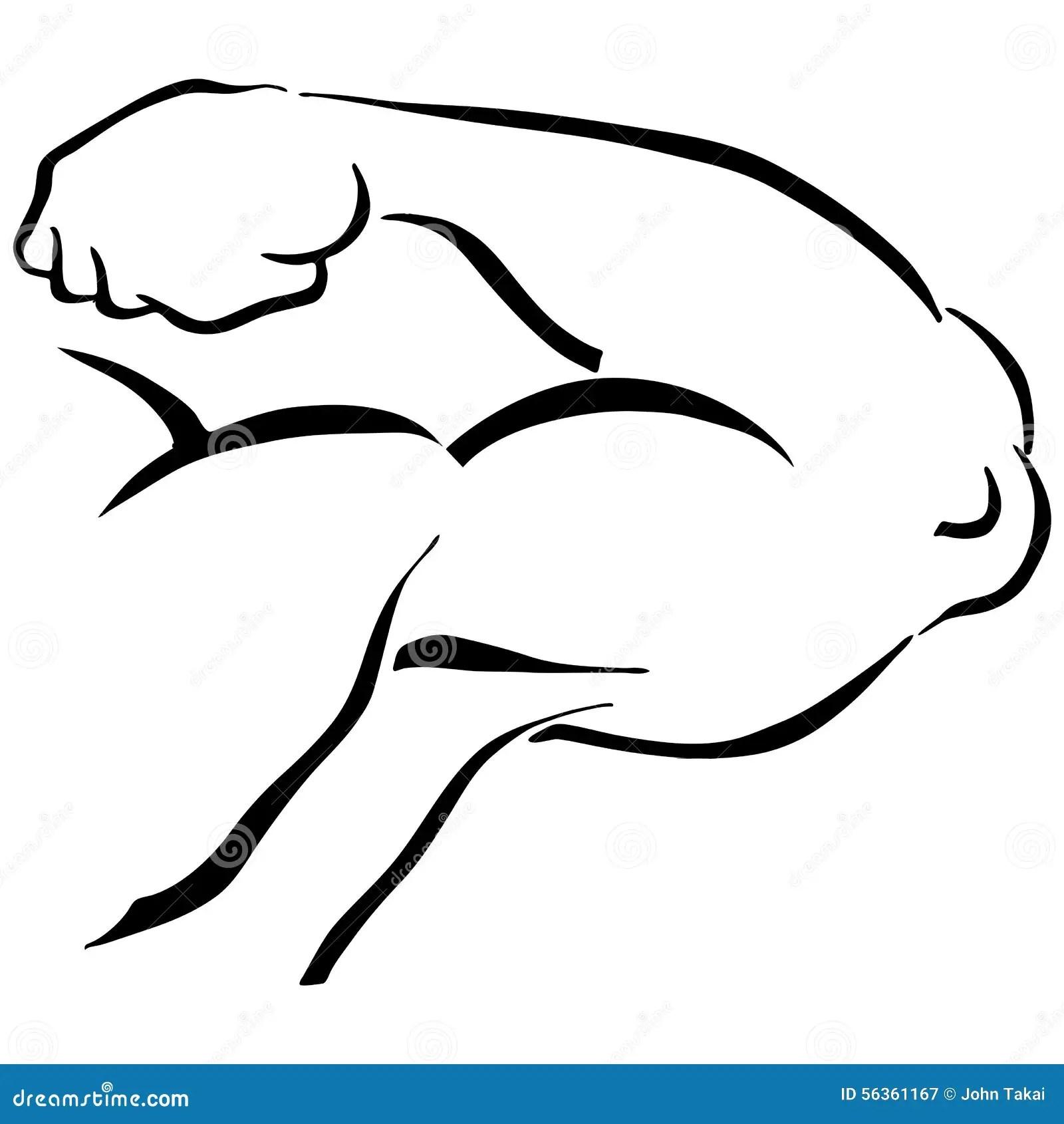 Strong Man Flexing Arm Stock Vector Illustration Of White