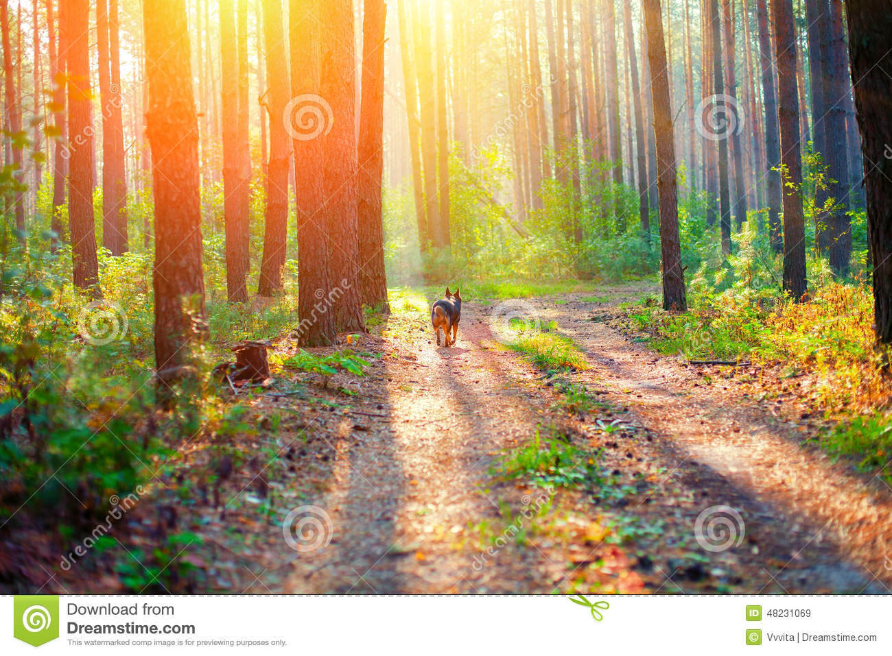 Sunrise In The Forest Stock Photo Image 48231069