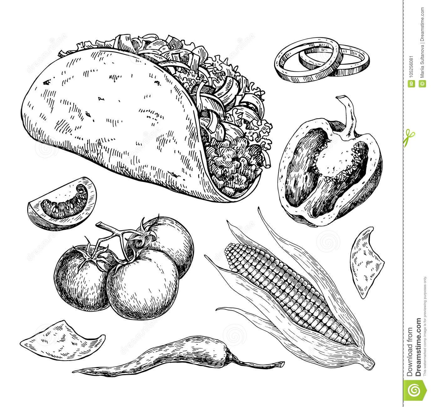 Taco Drawing With Vegetable Traditional Mexican Food