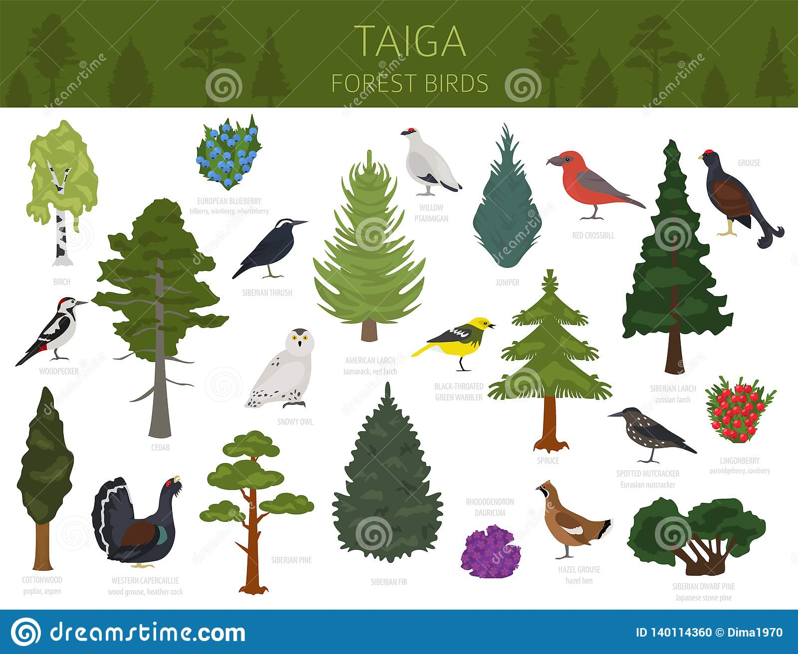 Winter the temperature is about 30f. Taiga Biome Boreal Snow Forest Terrestrial Ecosystem World Map Animals Birds Fish And Plants Infographic Design Stock Vector Illustration Of Cedar Infographic 140114360