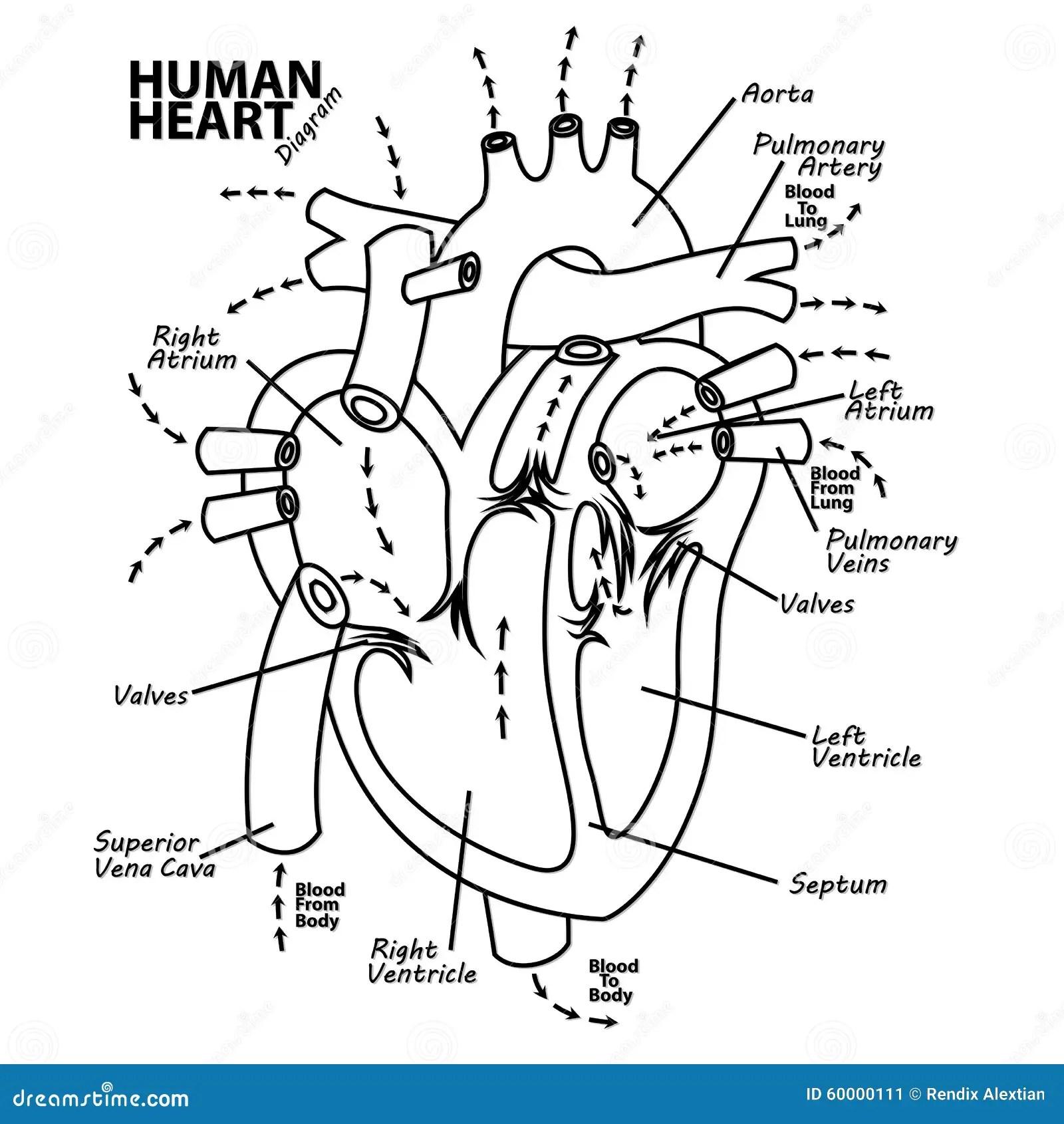 Tatouage Humain D Anatomie De Diagramme De Coeur
