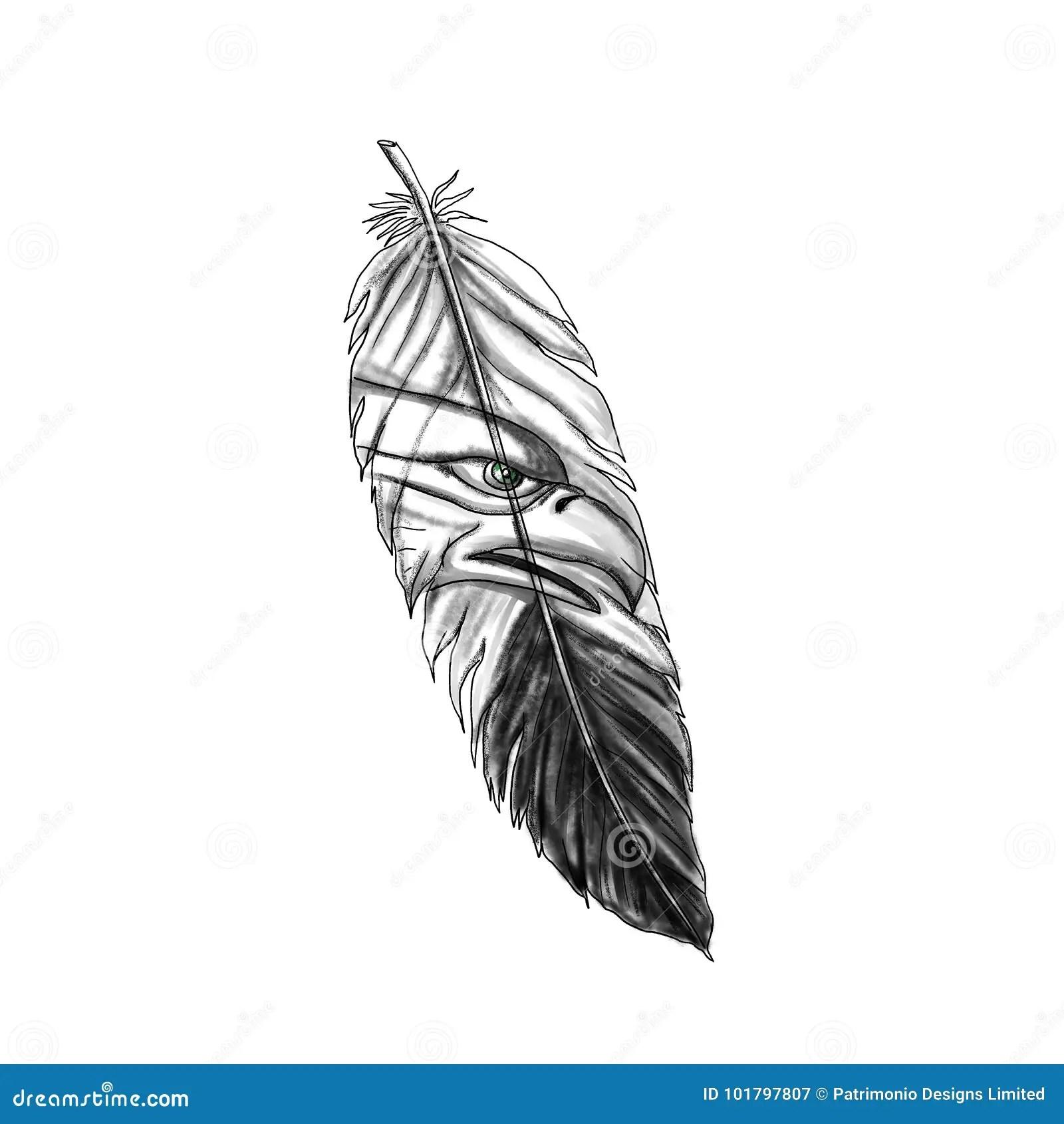 Sea Eagle Feather Tattoo Stock Illustration Illustration