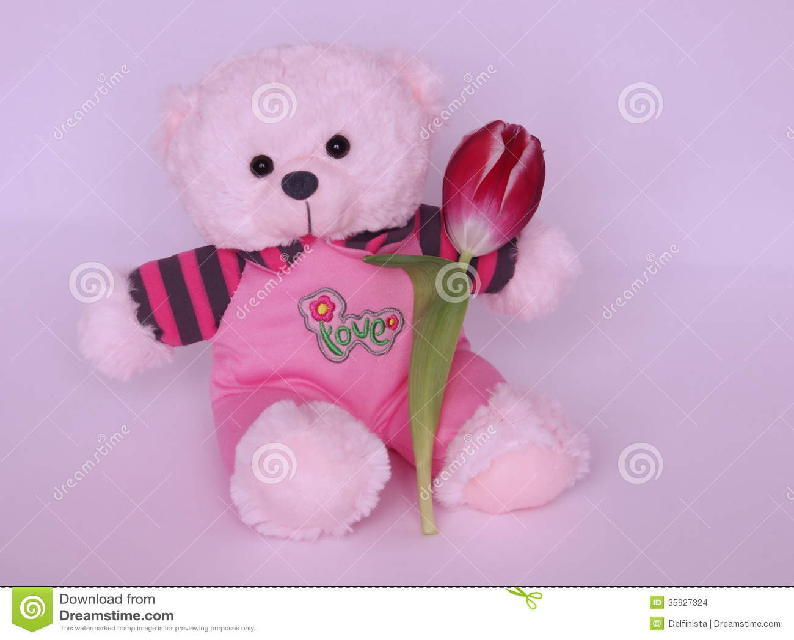 Teddy Bear With Tulip Valentines Day Stock Photos Stock