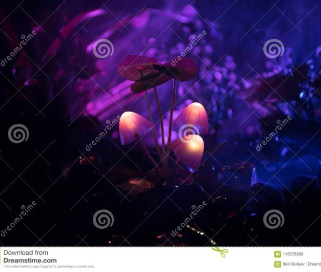 Three Fantasy Glowing Mushrooms In Mystery Dark Forest Close Up Beautiful Macro Shot Of Magic Mushroom Or Three Souls Lost In Avatar Forest Fairy Lights