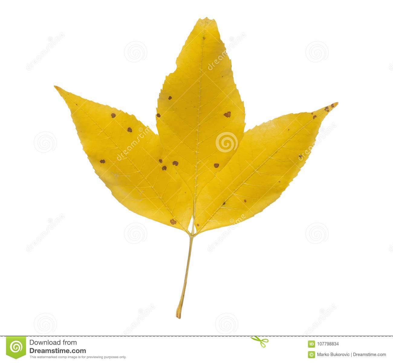 Three Yellow Autumn Leaf With Red Dot Like Symbol Of