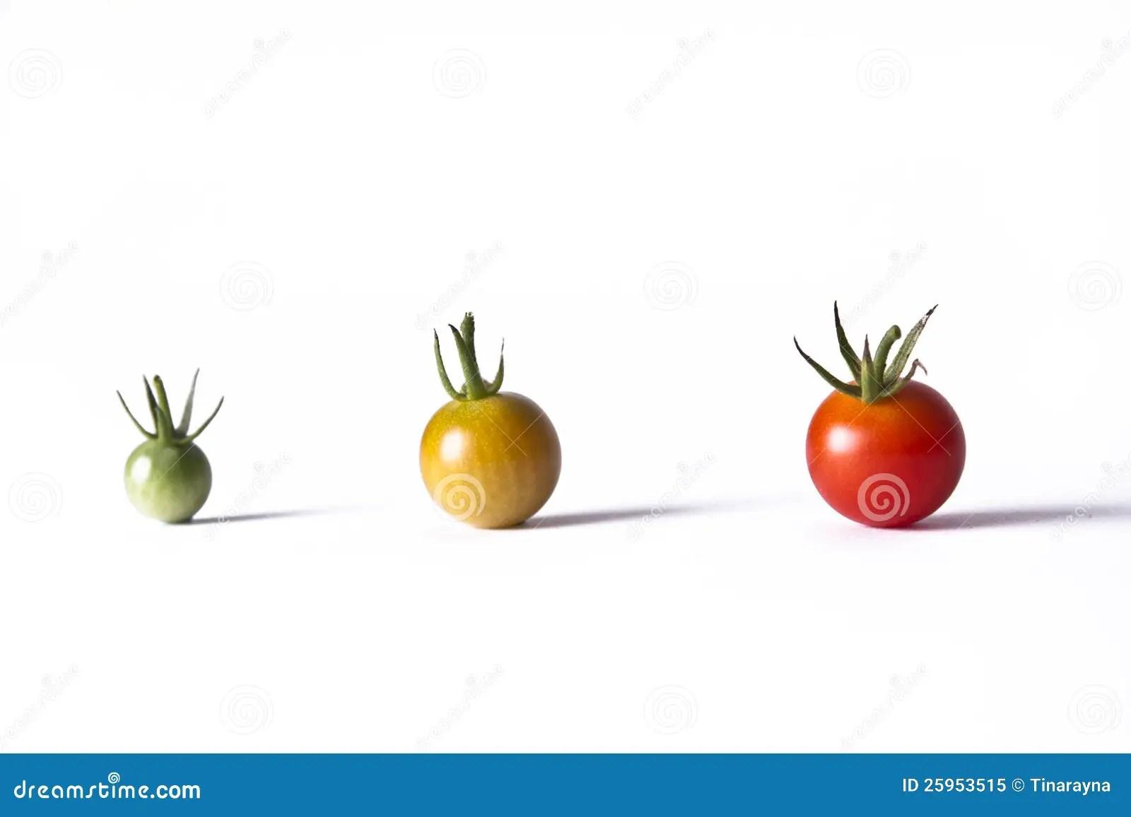 Tomato Life Cycle Royalty Free Stock Photo