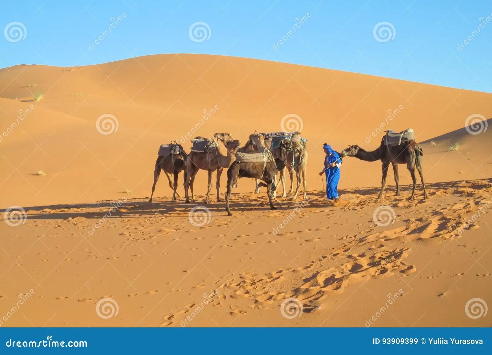 Tourist Camel Caravan In Africa Sand Desert Dunes