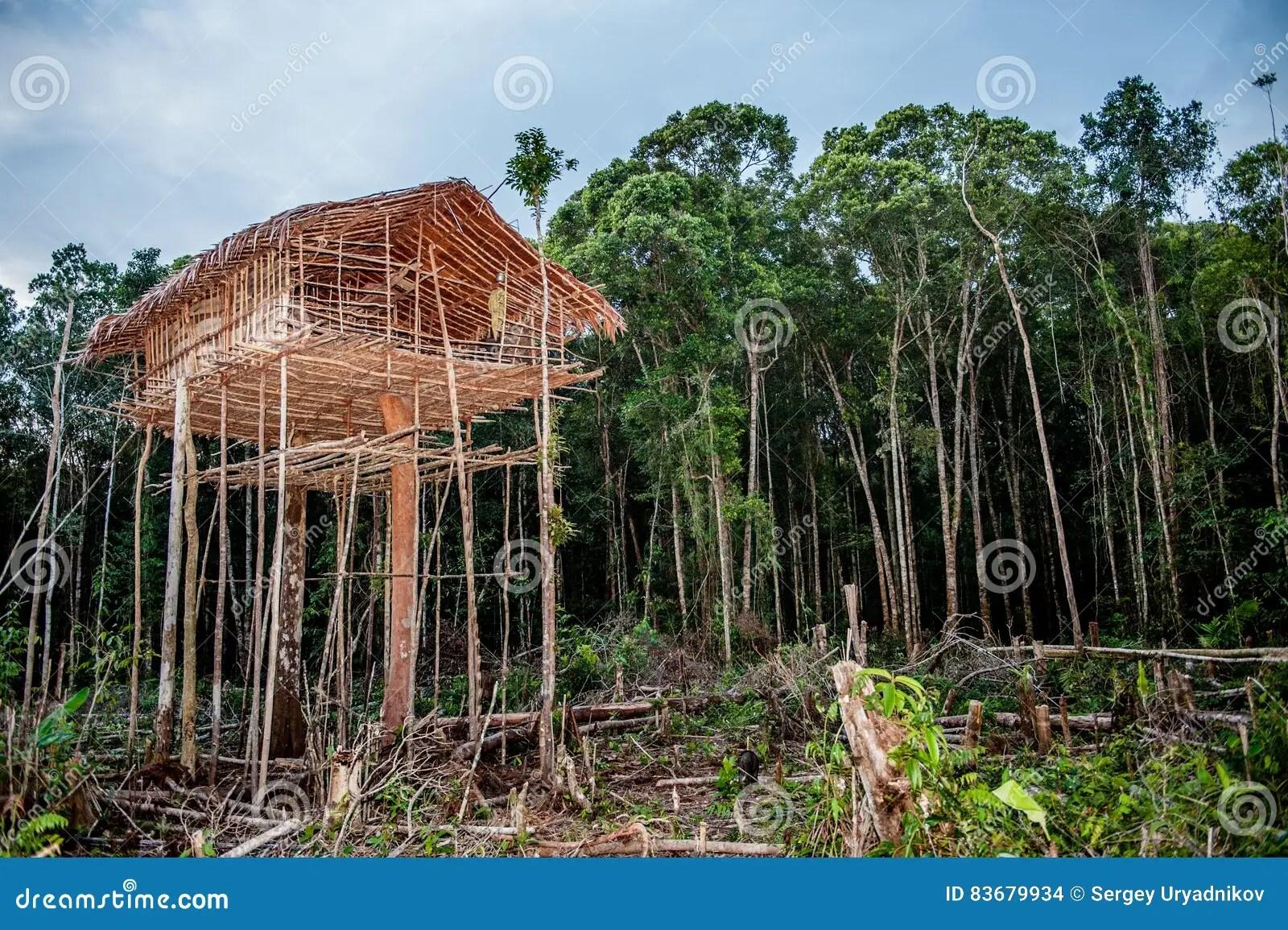 Traditional Korowai House Stock Photo Image Of Indonesia 83679934