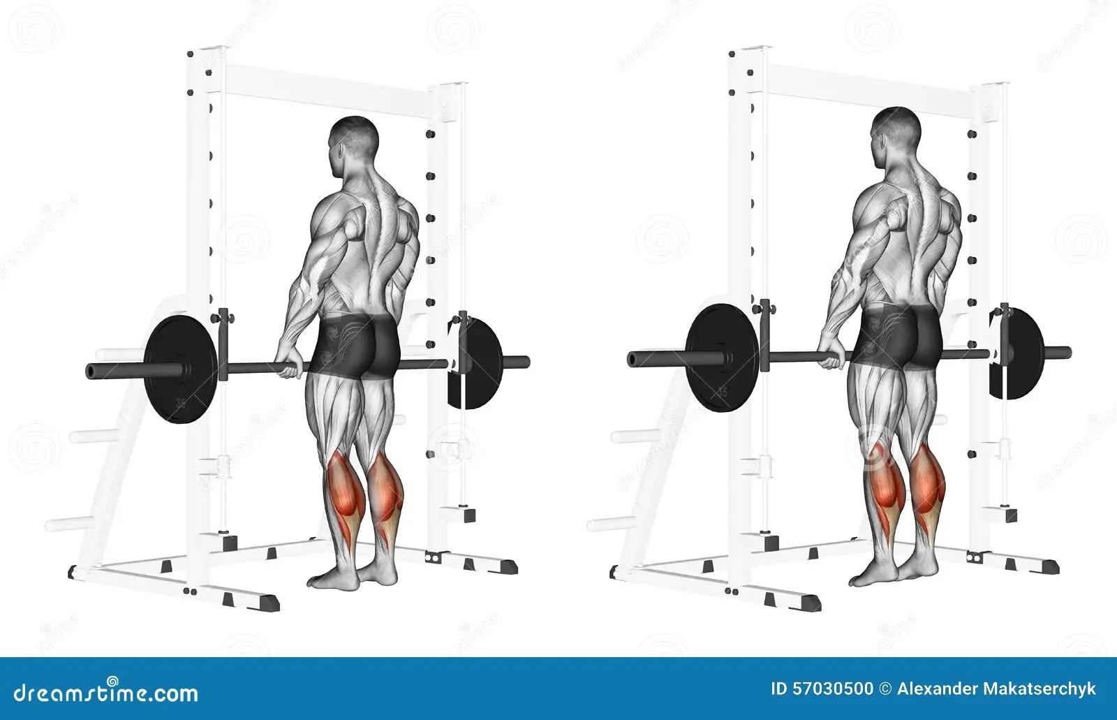 Trainieren Aufstieg Auf Zehen Mit Einem Barbell Stock