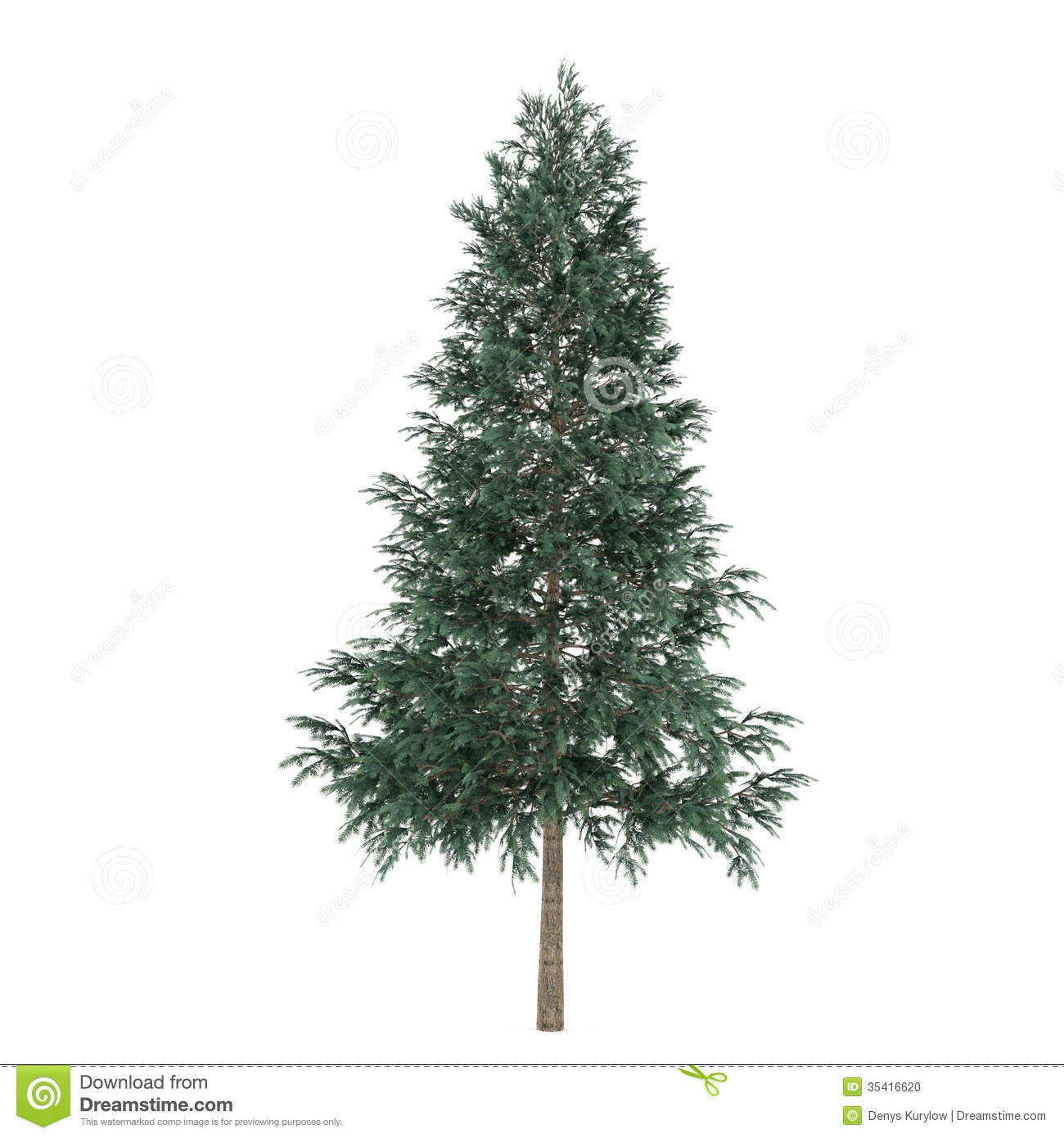 Tree Isolated Picea Abies Fir Tree Stock Photo Image
