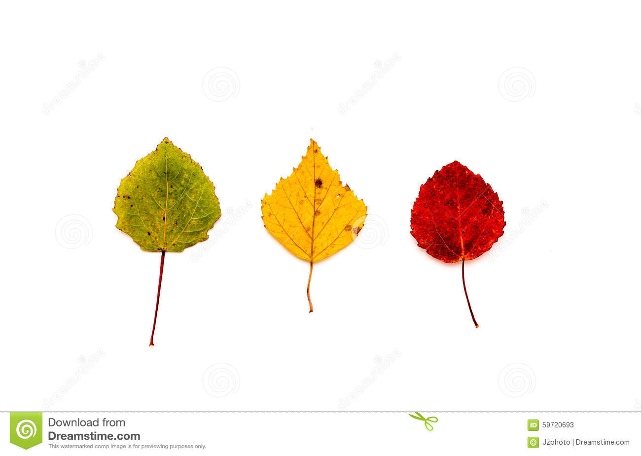 Tree Leaves Green Yellow And Red Stock Image