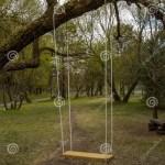 Tree Swings Tree Swing Garden Swings Stock Photo Image Of Chain Daycare 145880206