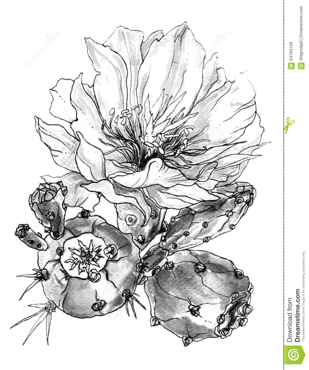 Tropical Cactus Flower In Blossom Watercolor Black And