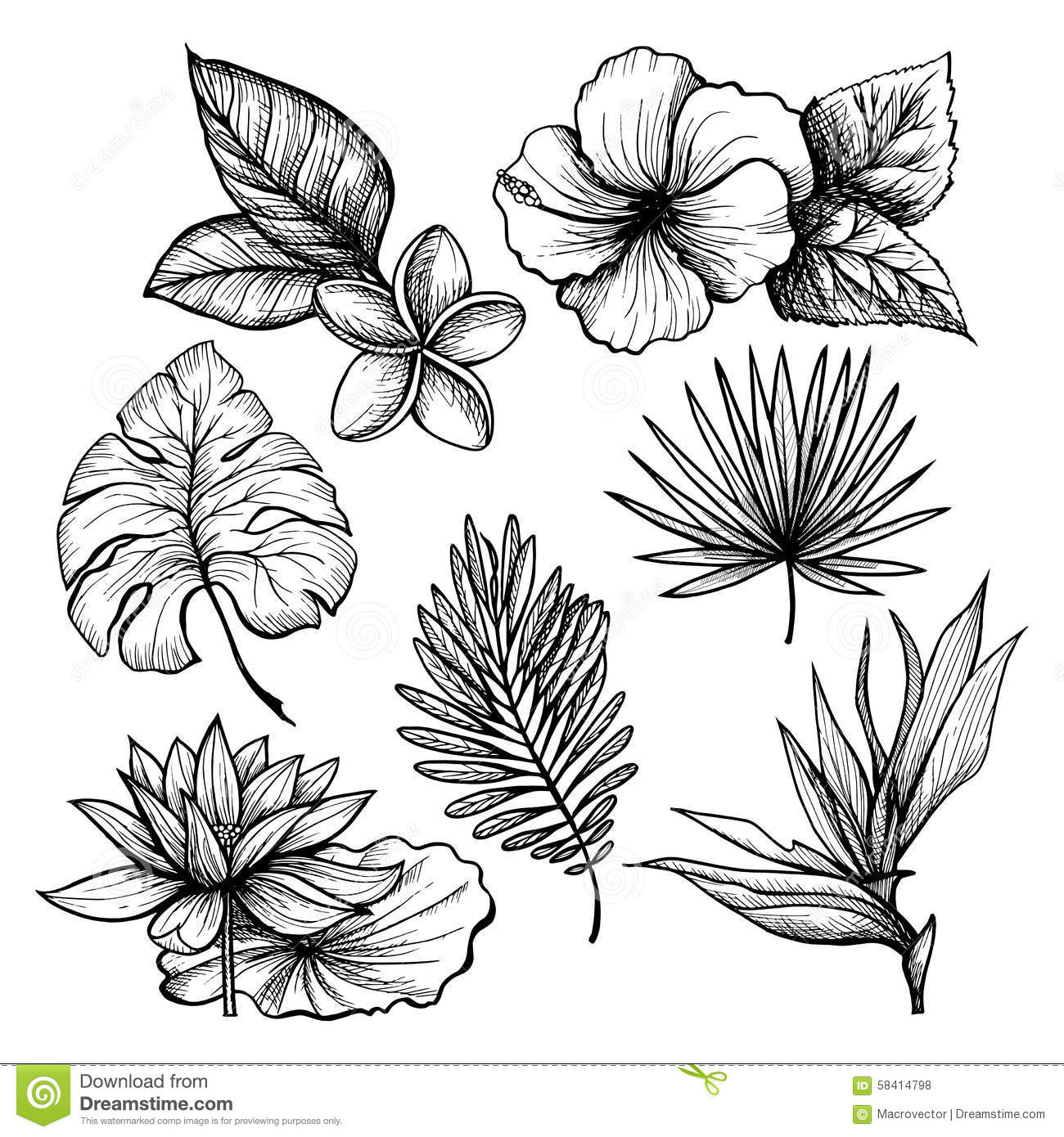 Tropical Leaves Set Stock Vector Illustration Of Elements