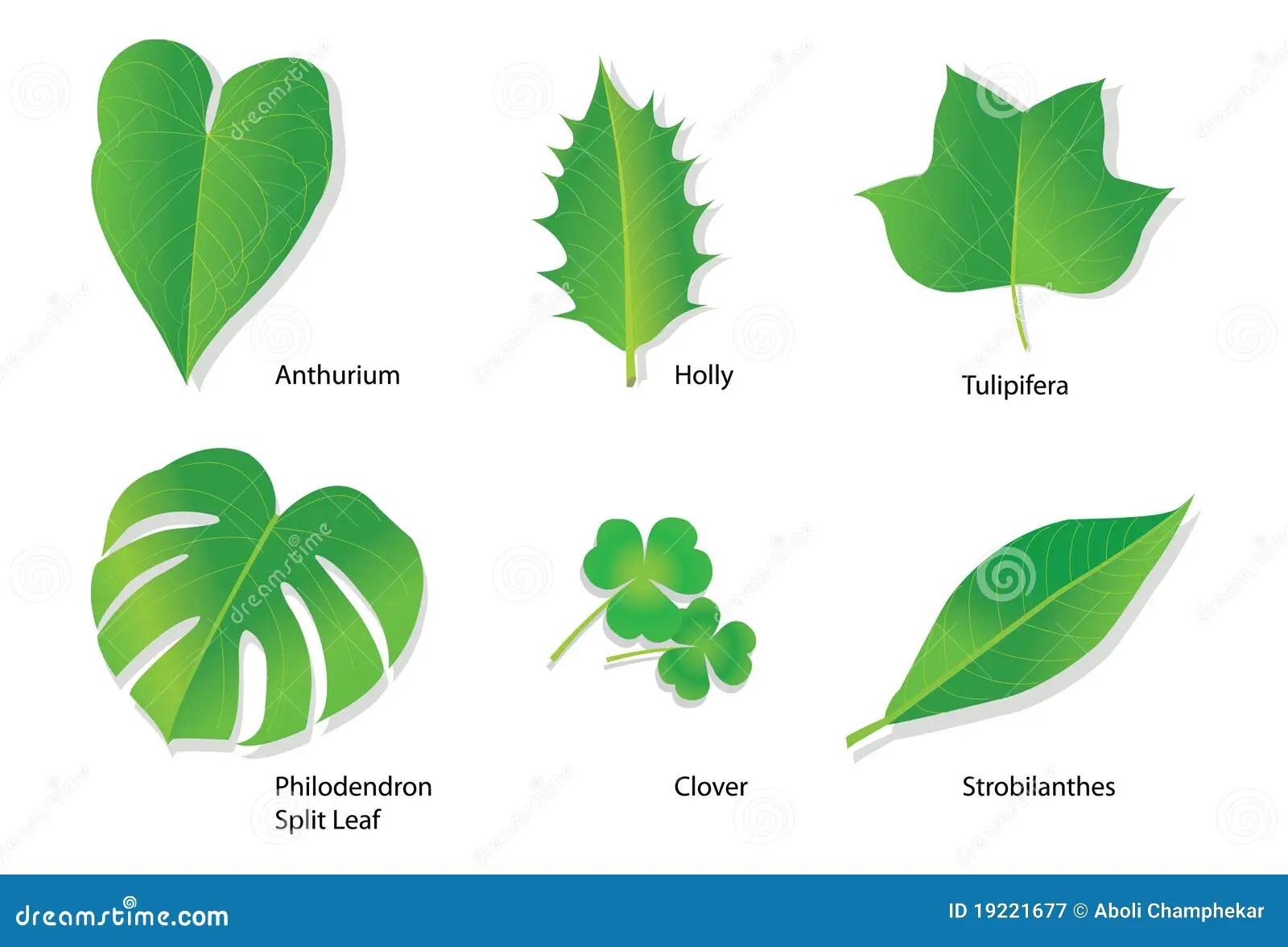 Tropische Bladeren Met Botanische Namen Vector Illustratie