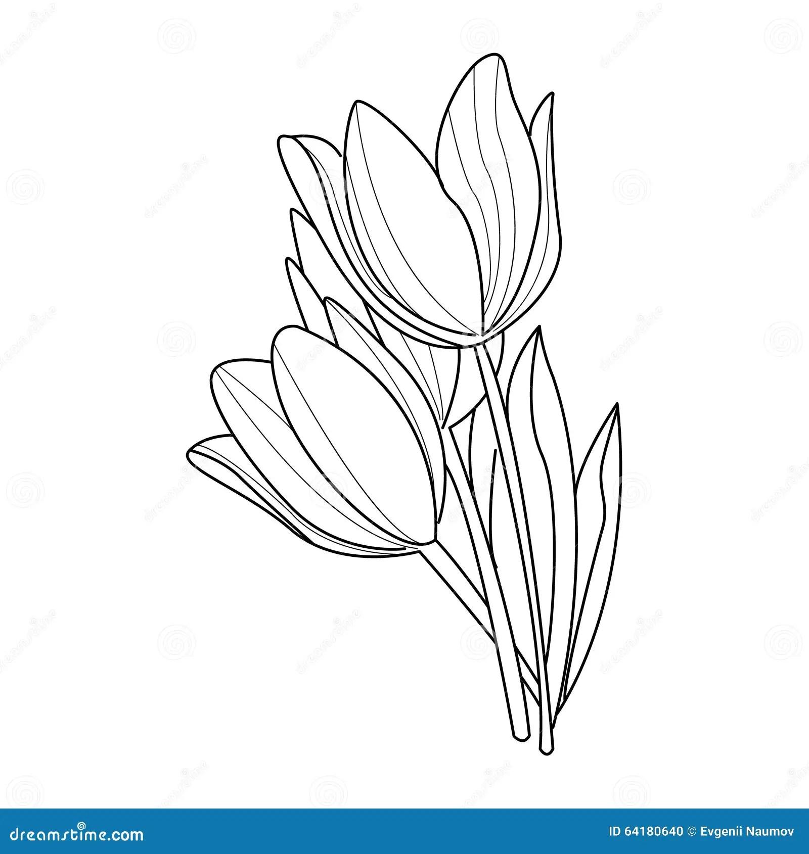 Tulip Flowers Sketch Vettore Illustrazione Vettoriale