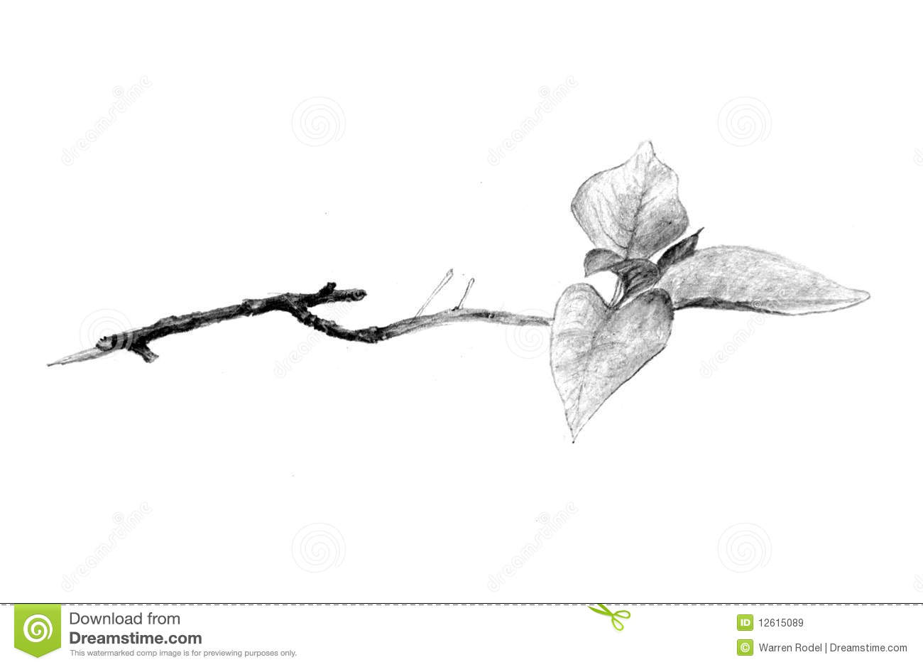 Twig Royalty Free Stock Images