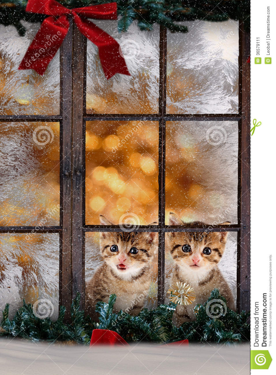 Two Cats Kittens Sitting At The Window With Christmas