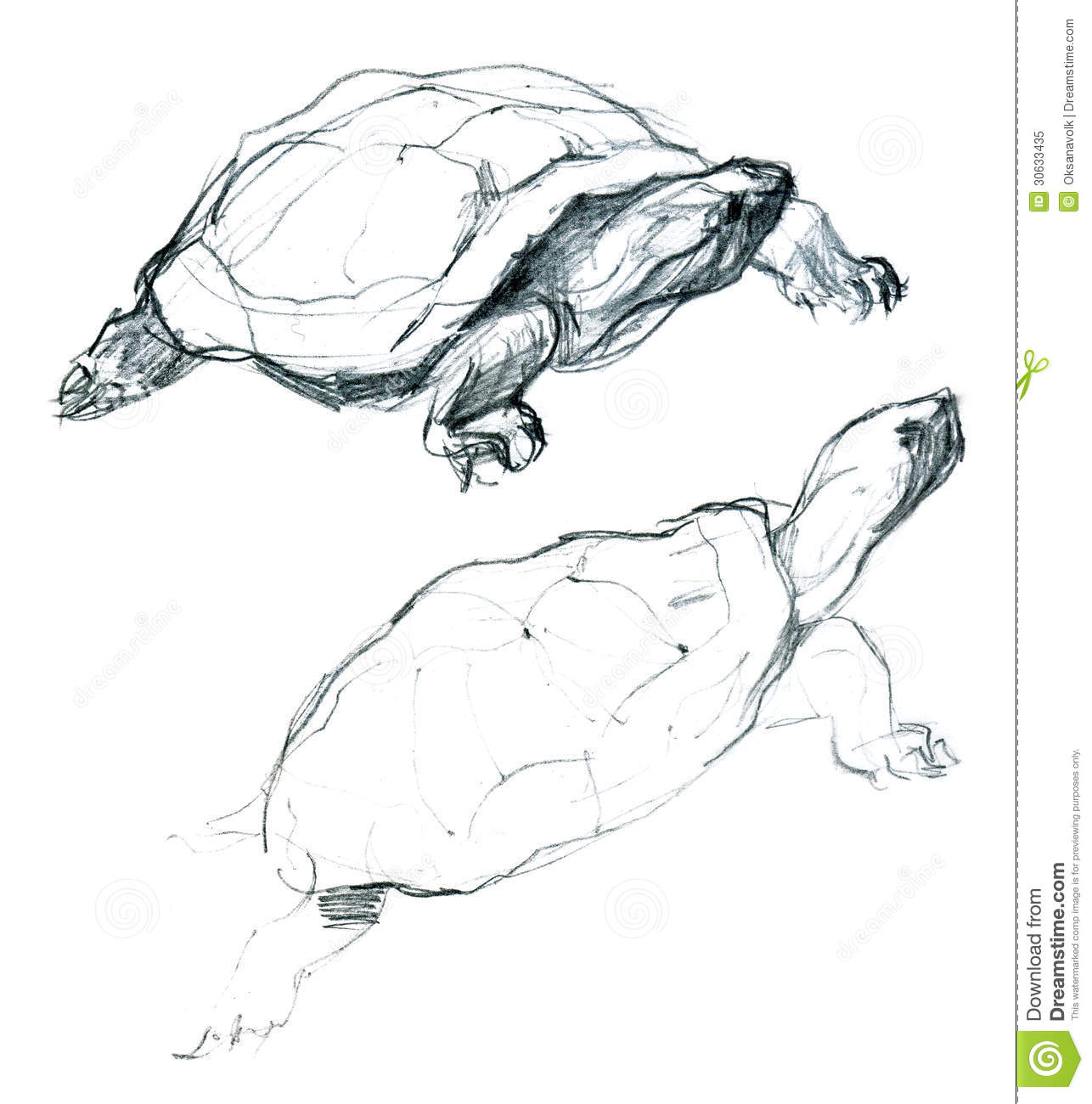 Two Little Turtles Pencil Artistic Sketch Stock