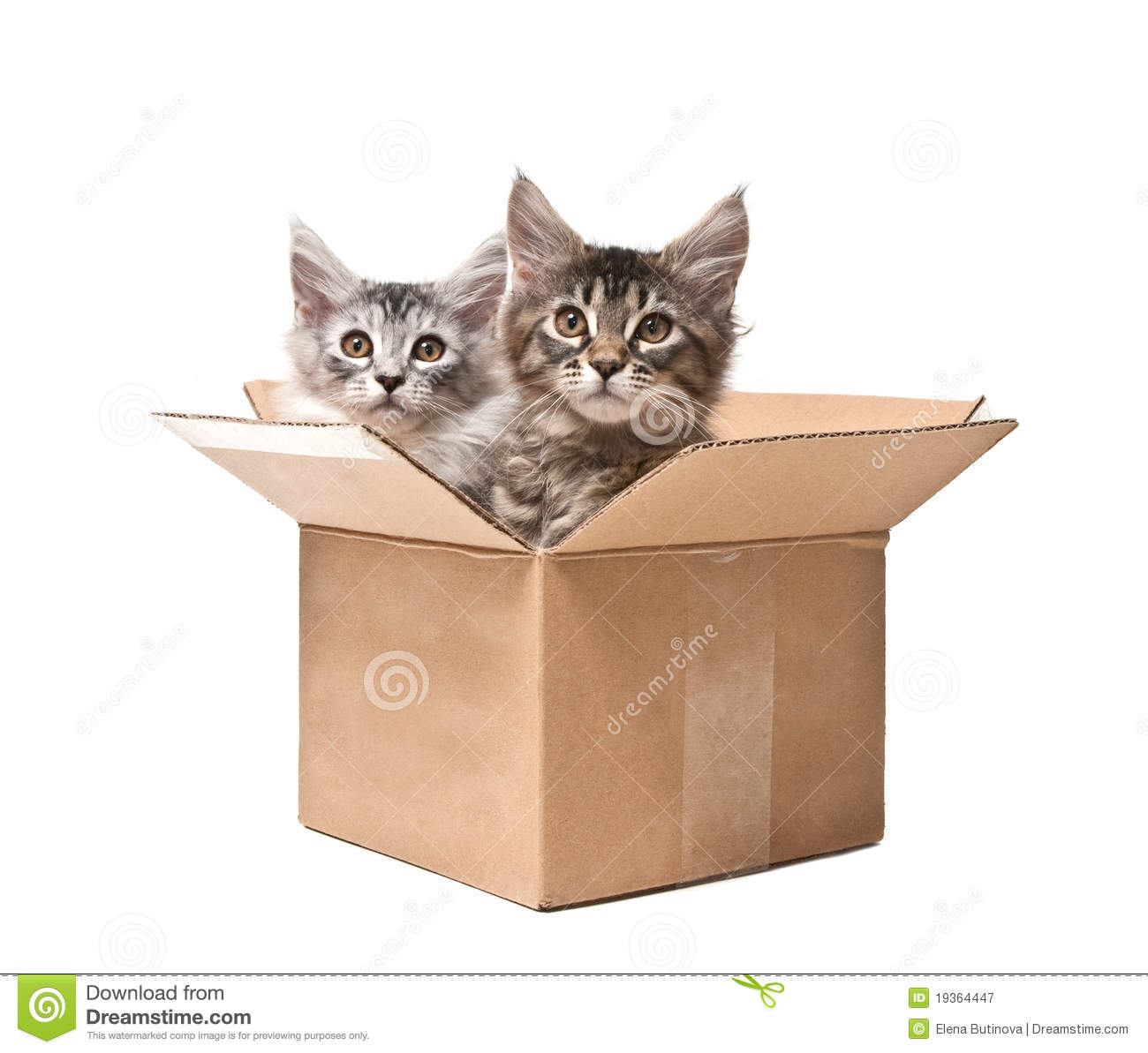 Two Small Kittens In A Cardboard Box Royalty Free Stock