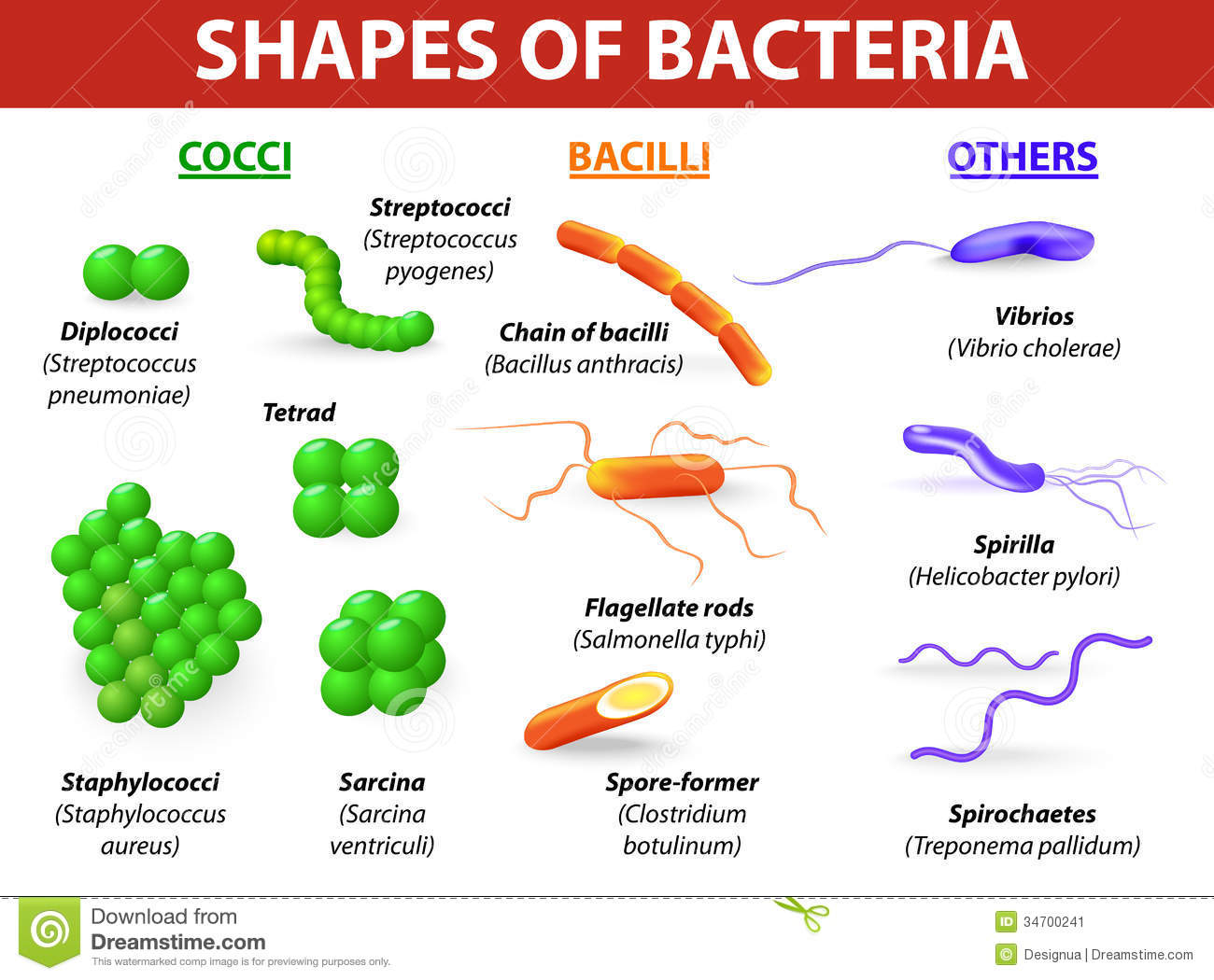 Types Of Bacteria Stock Image