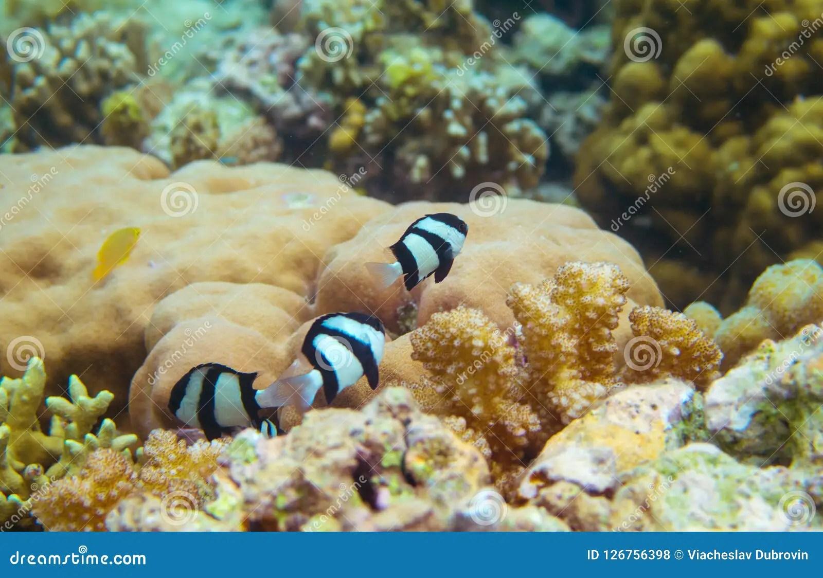 Tropical Fish Black White Stock Photos