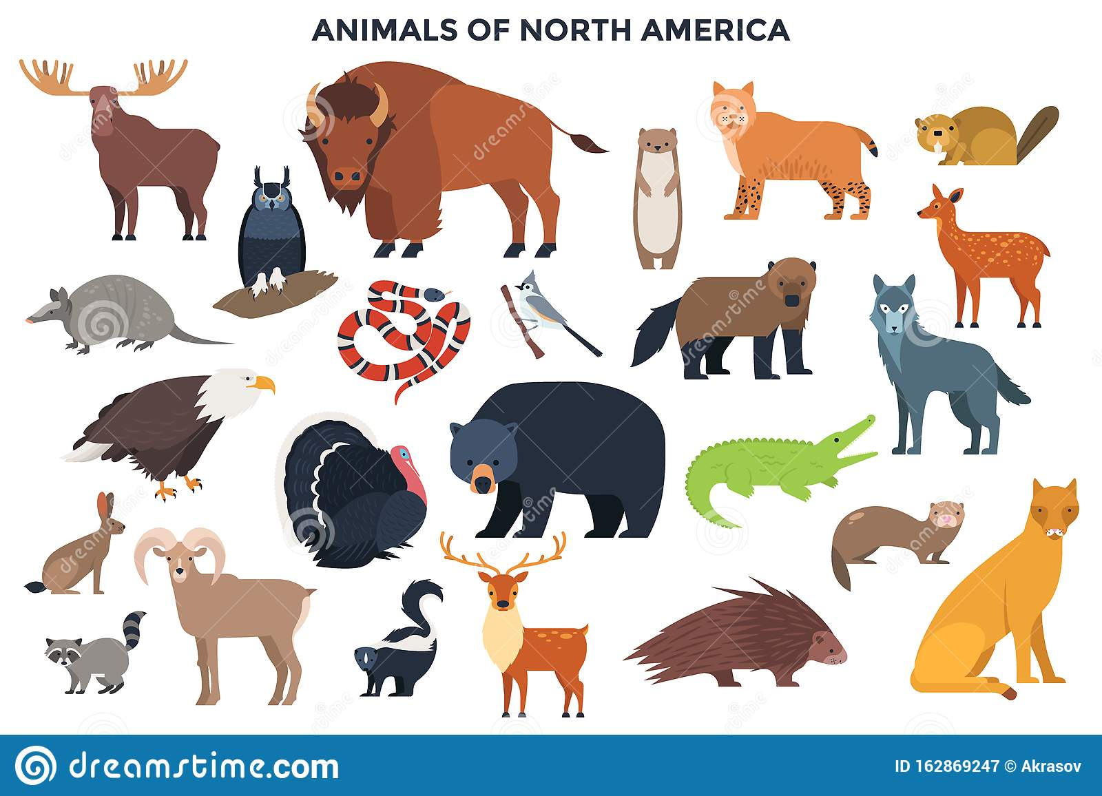 Vector Animals Of North America Stock Vector