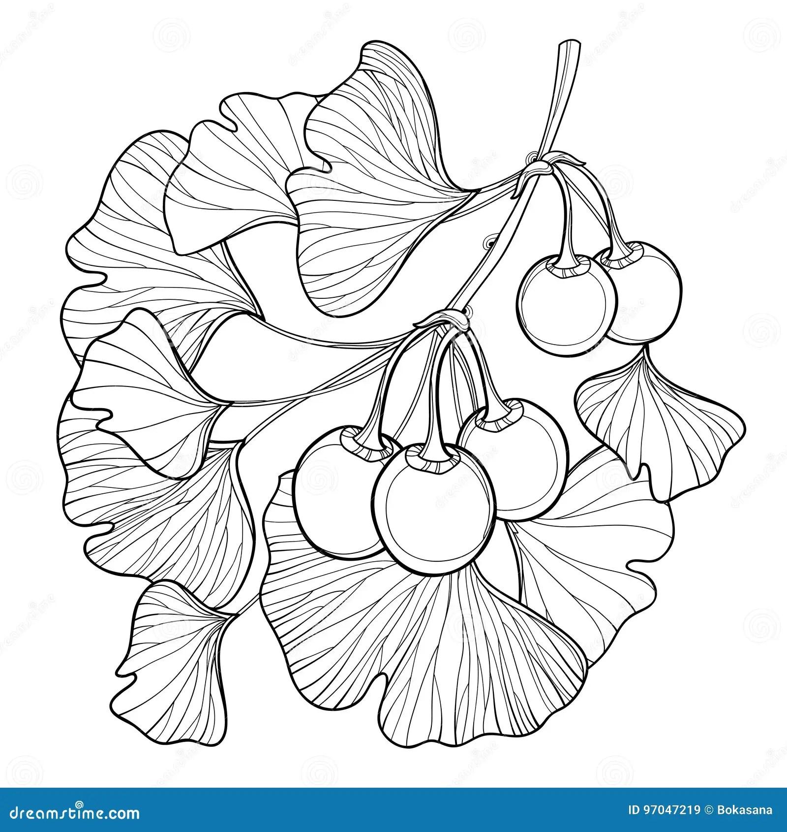Clipart Fruit