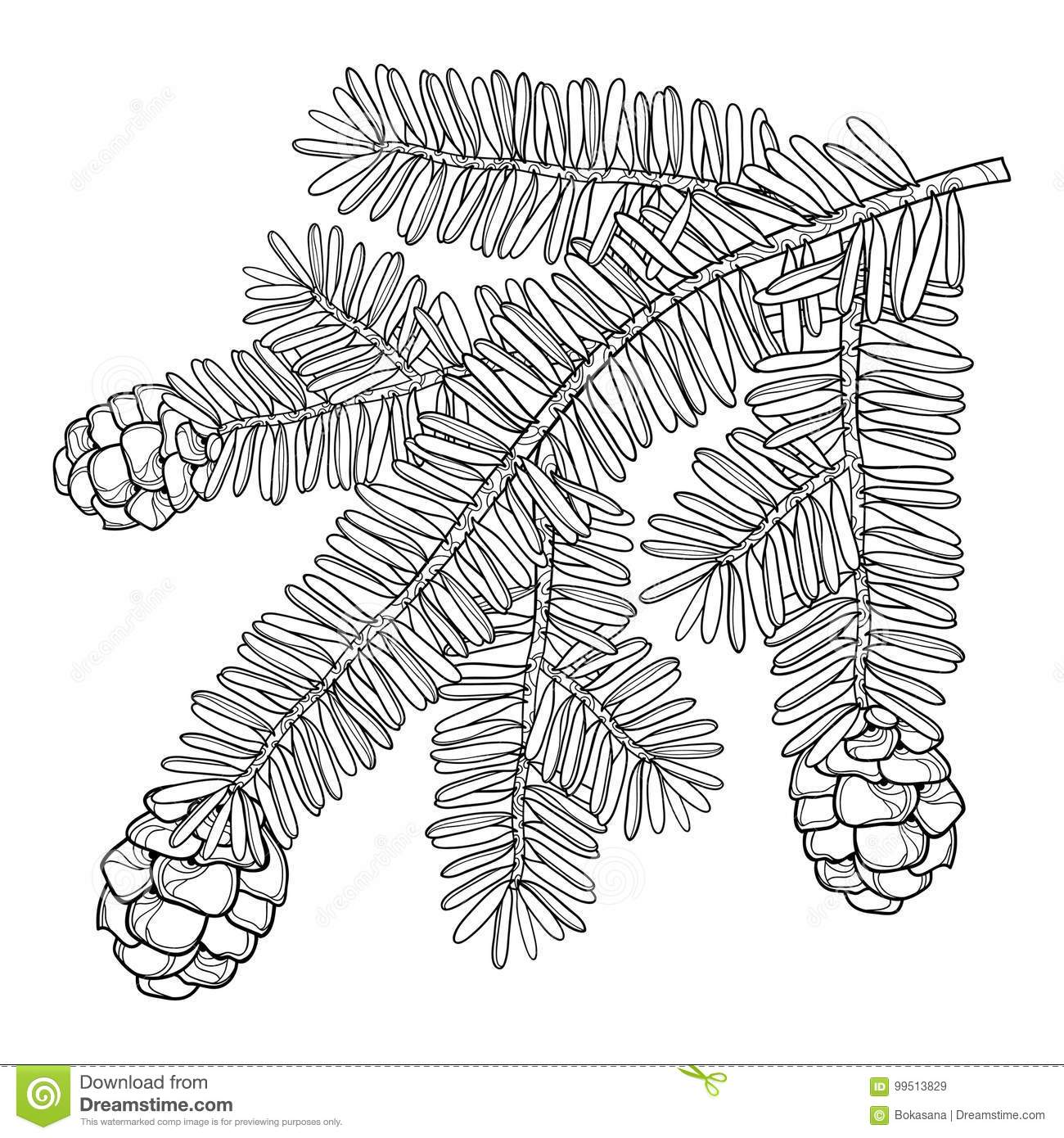 Canadian Evergreen Tree Pine Sketch Cartoon Vector
