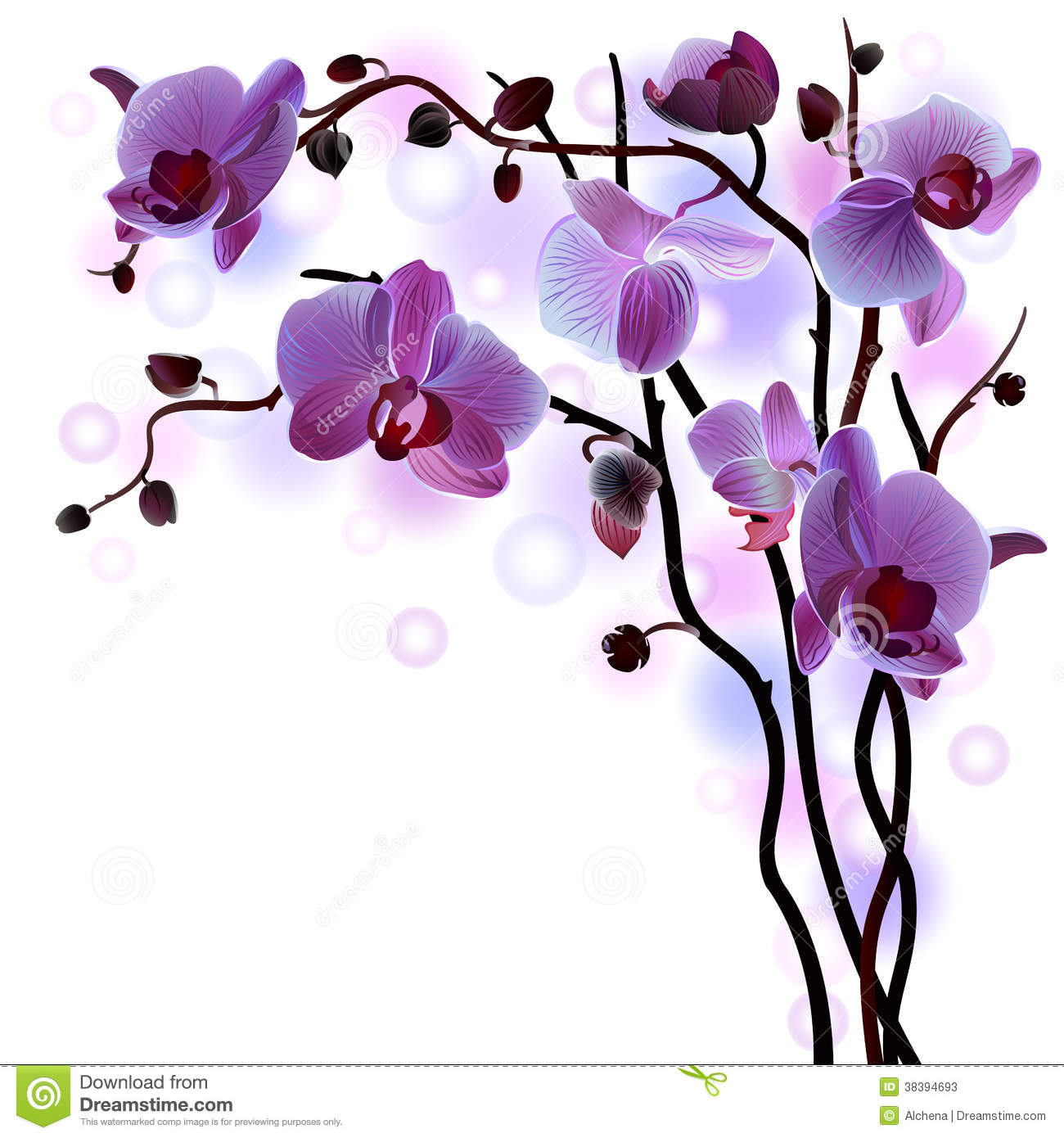 Vector Branch Of Violet Orchids Stock Vector Image 38394693